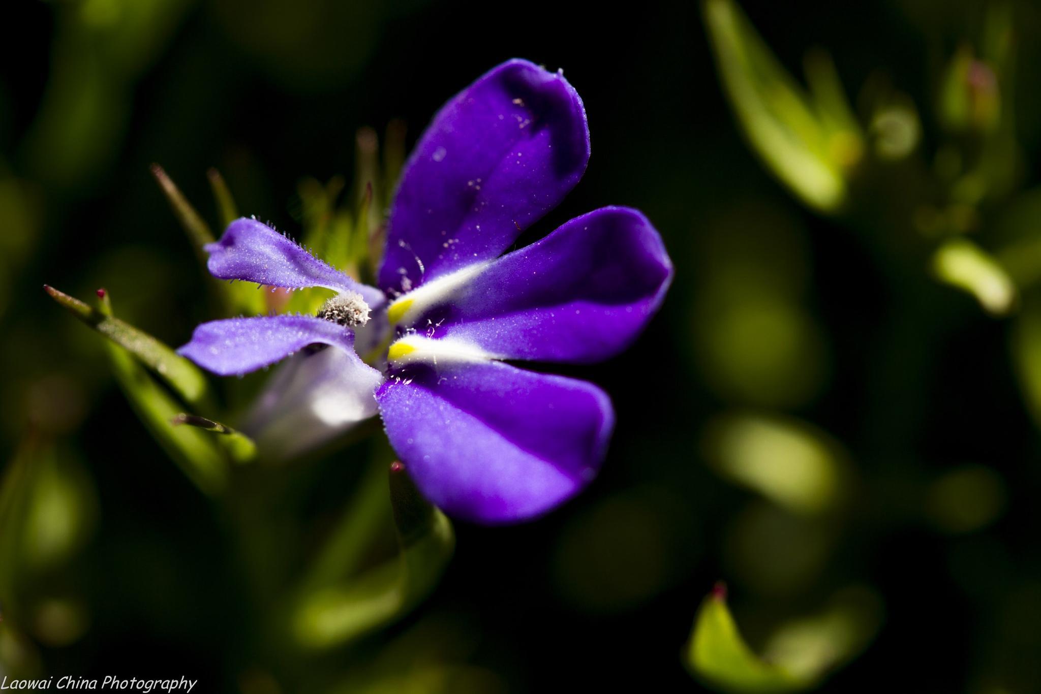 Little blue  by Arie Boevé