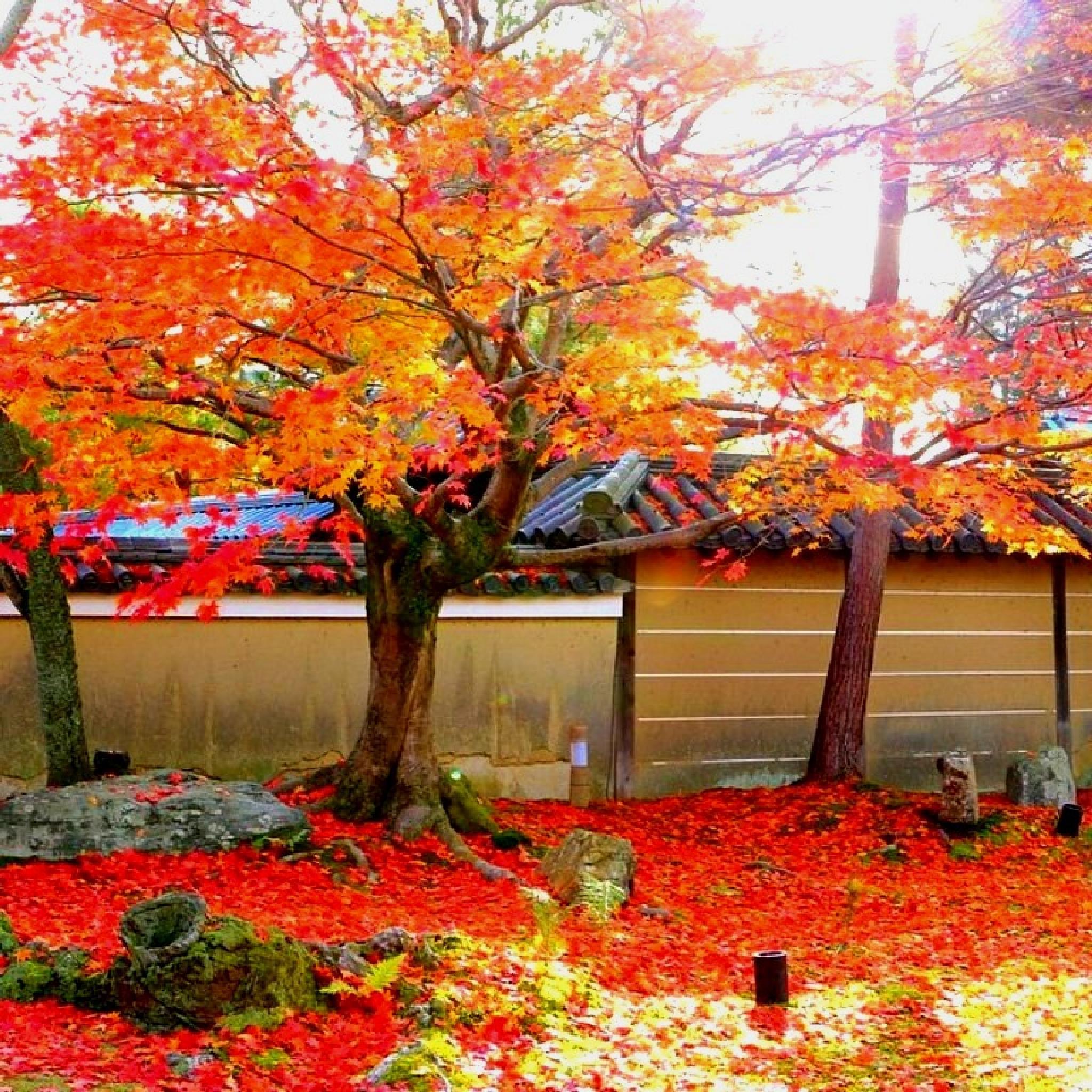 #Autumn #Kodaiji #Temple # by erniisa2