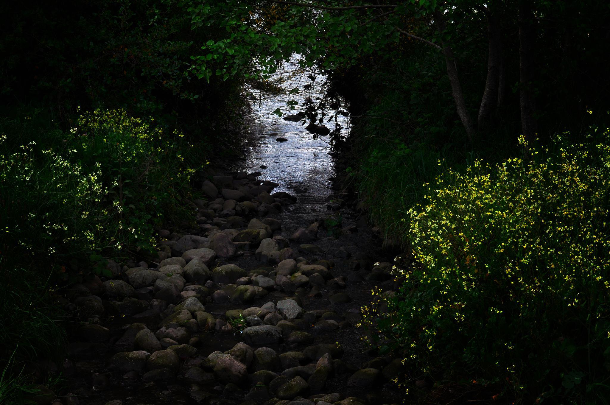 Photo in Landscape #stream #hutt river #nz #inviting #pathway #good light