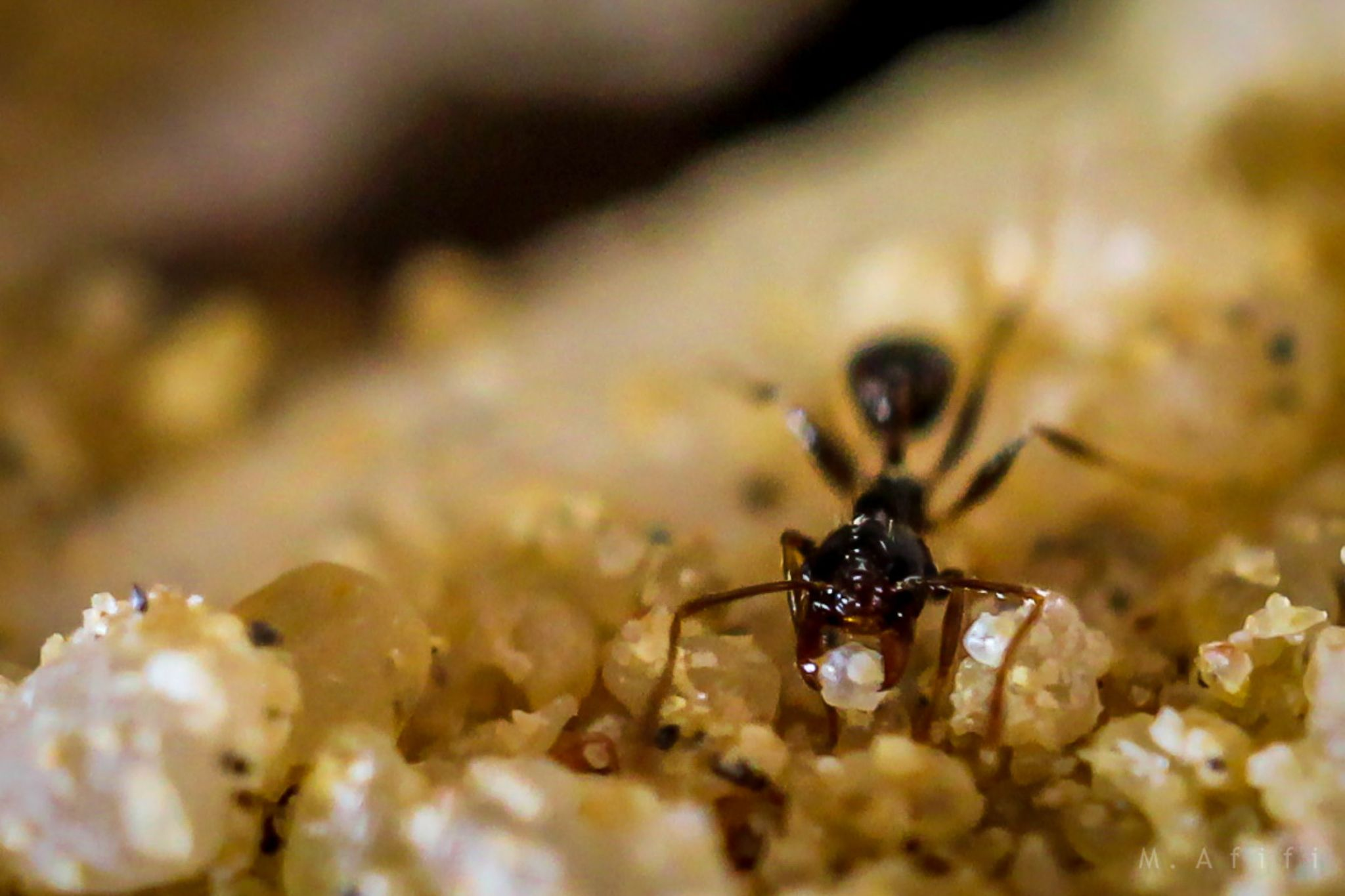 Ants by M. Afifi