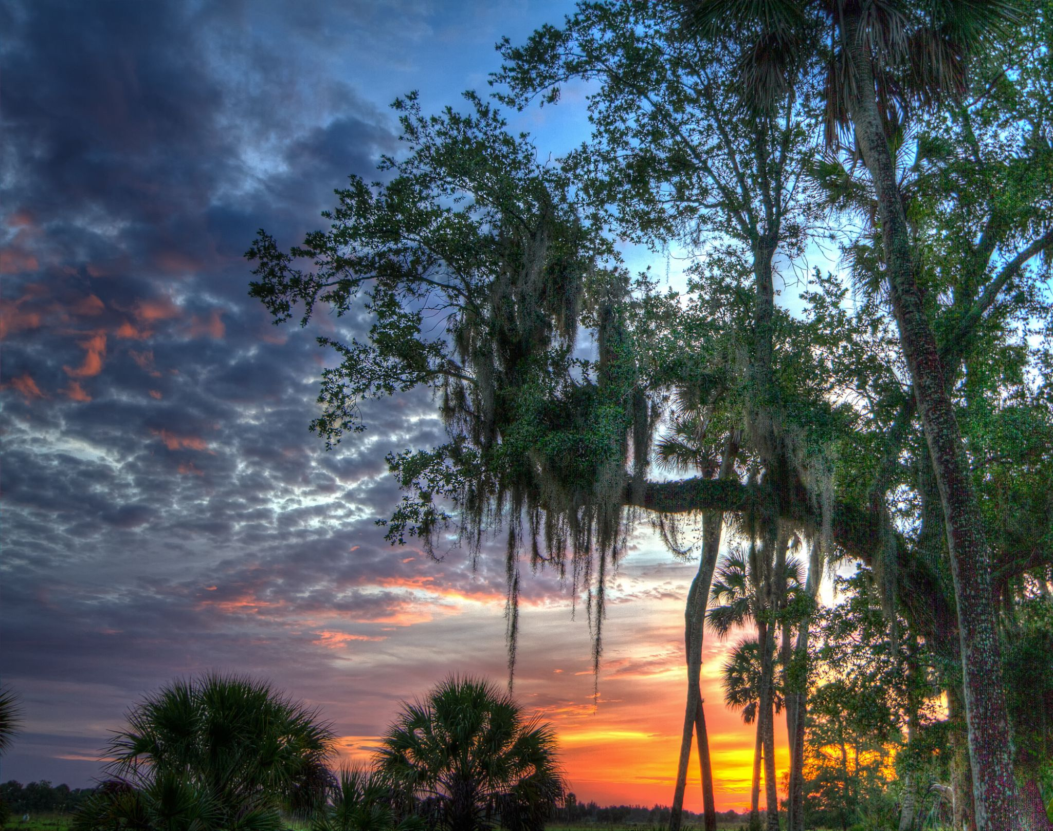 Sunrise Treasure Hammock Ranch... by clyderscent