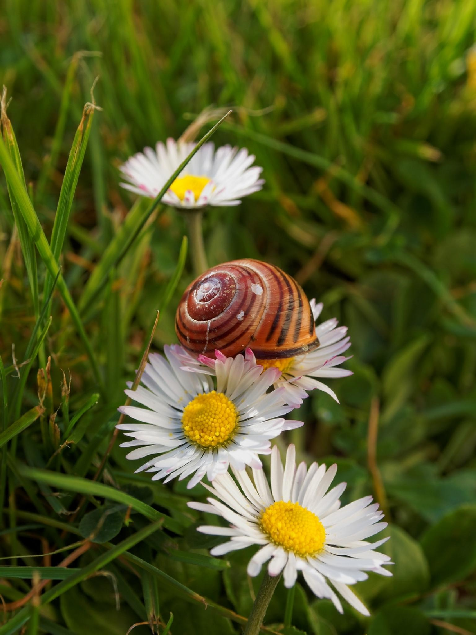 Photo in Macro #escargot #fleurs #lit