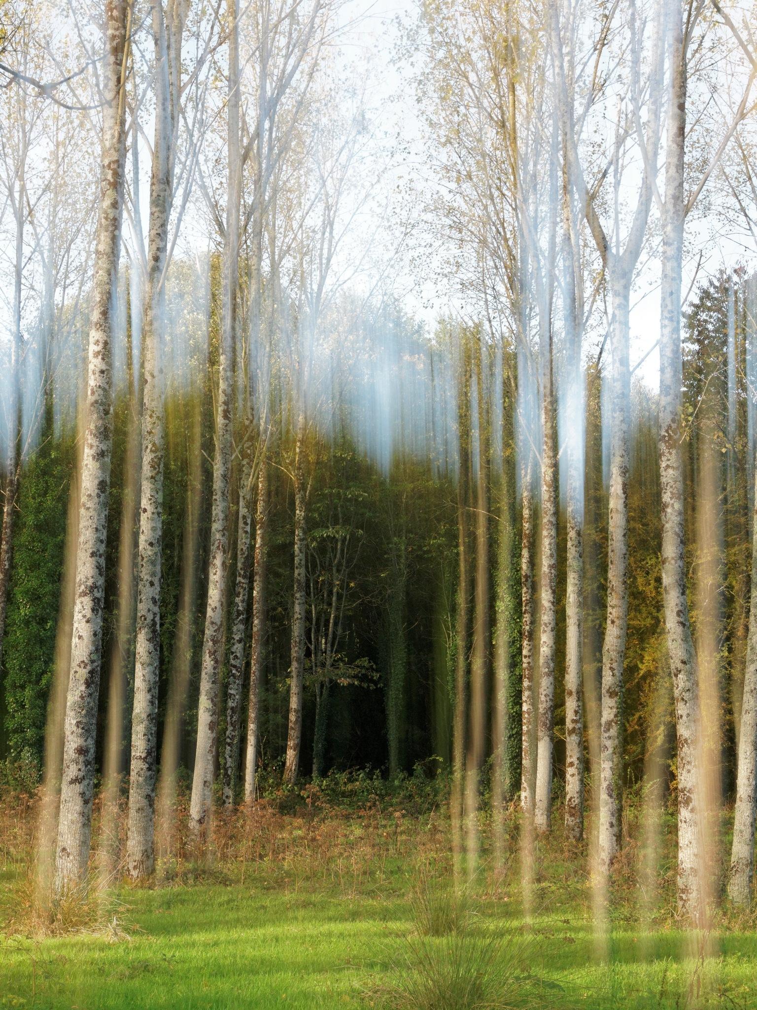 forêt by leotempo