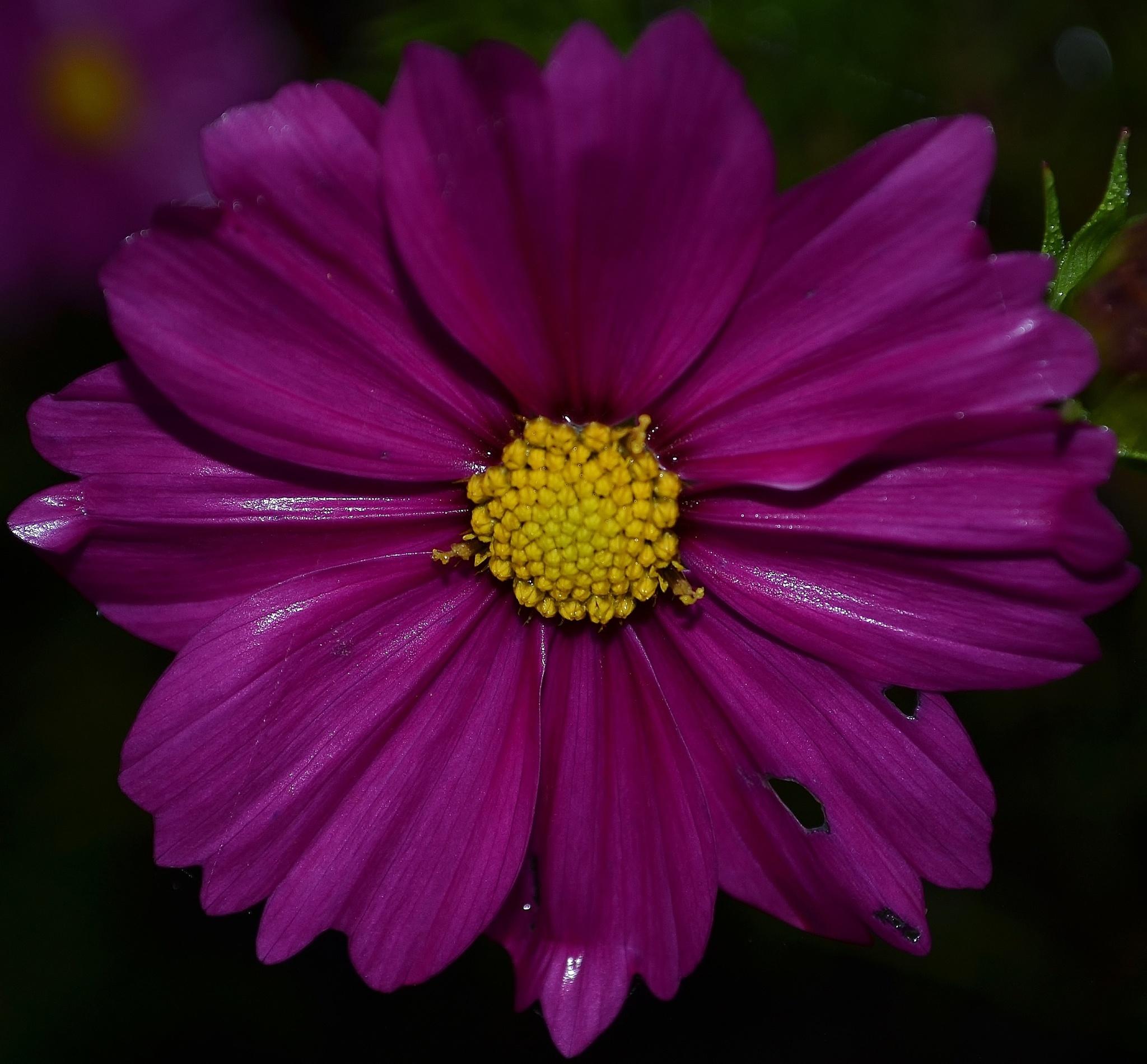 Purple Passion by Alan Hammond