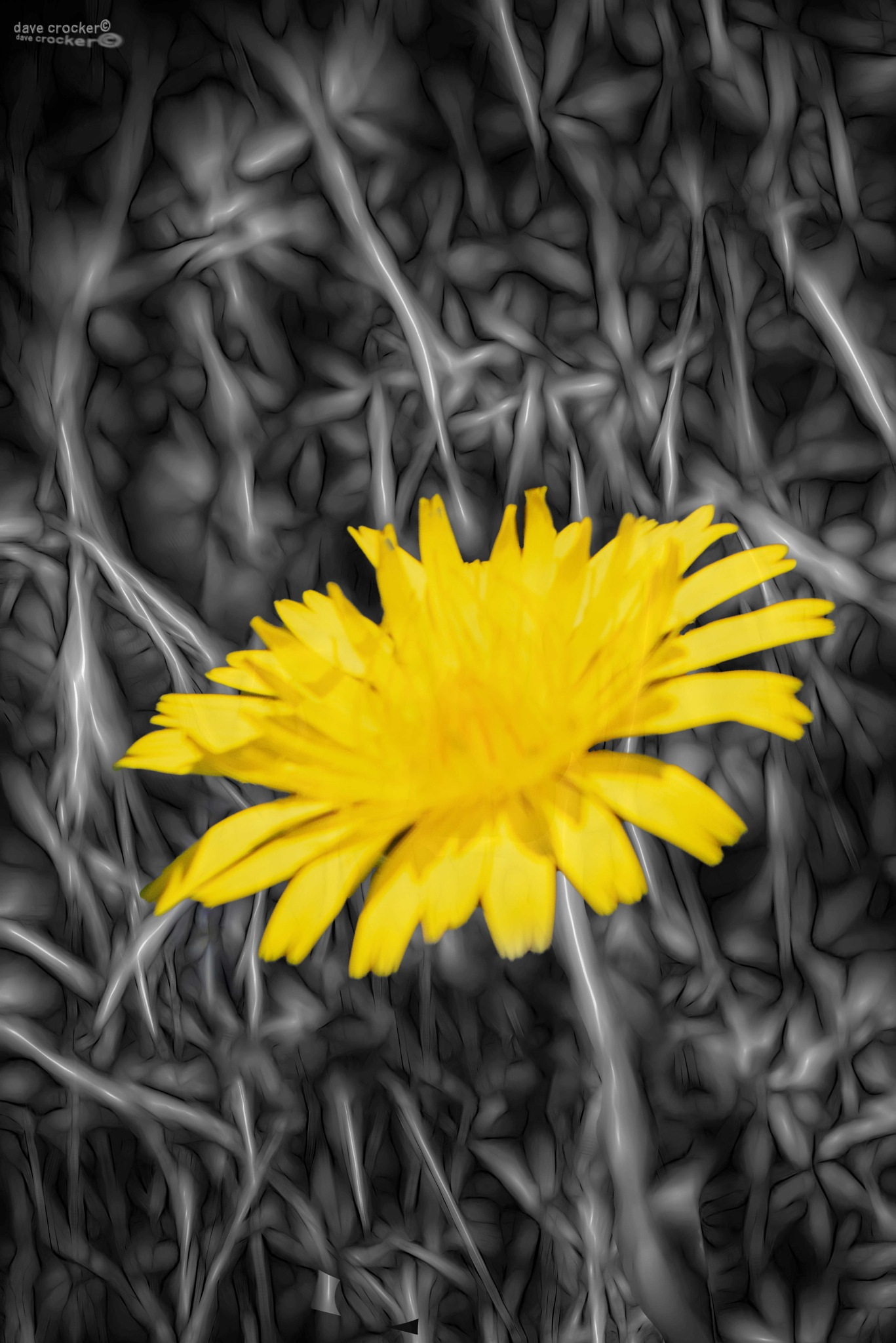 Fleur Jaune by Lightpimp - akadodjer