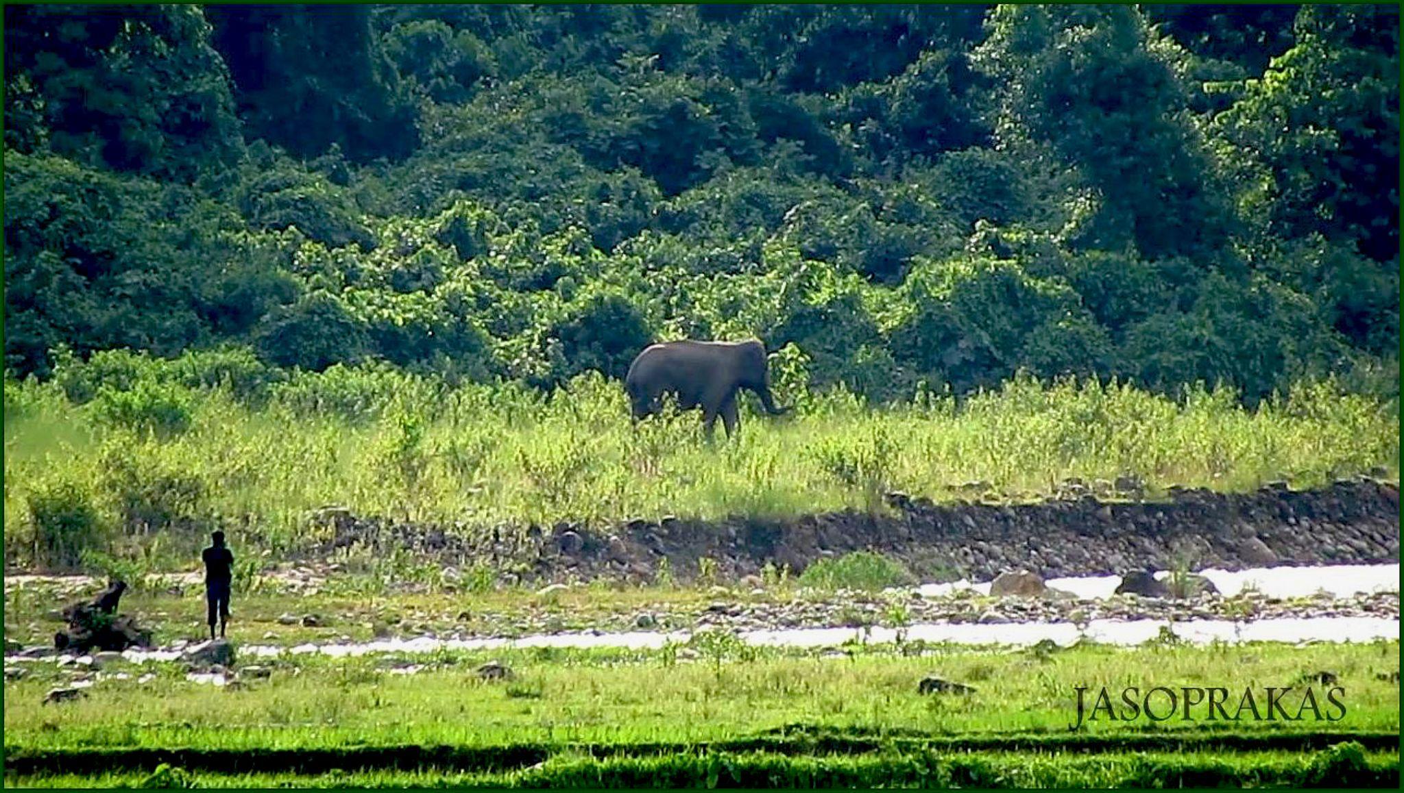 River Side Elephant by jasoprakas