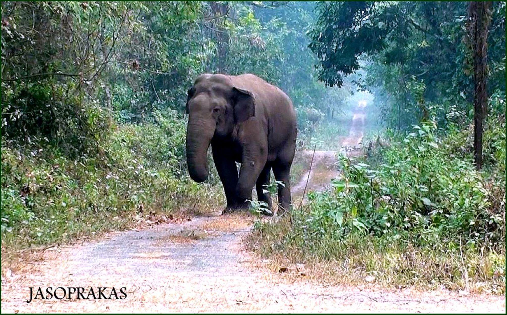 Great Makna Elephant.... by jasoprakas