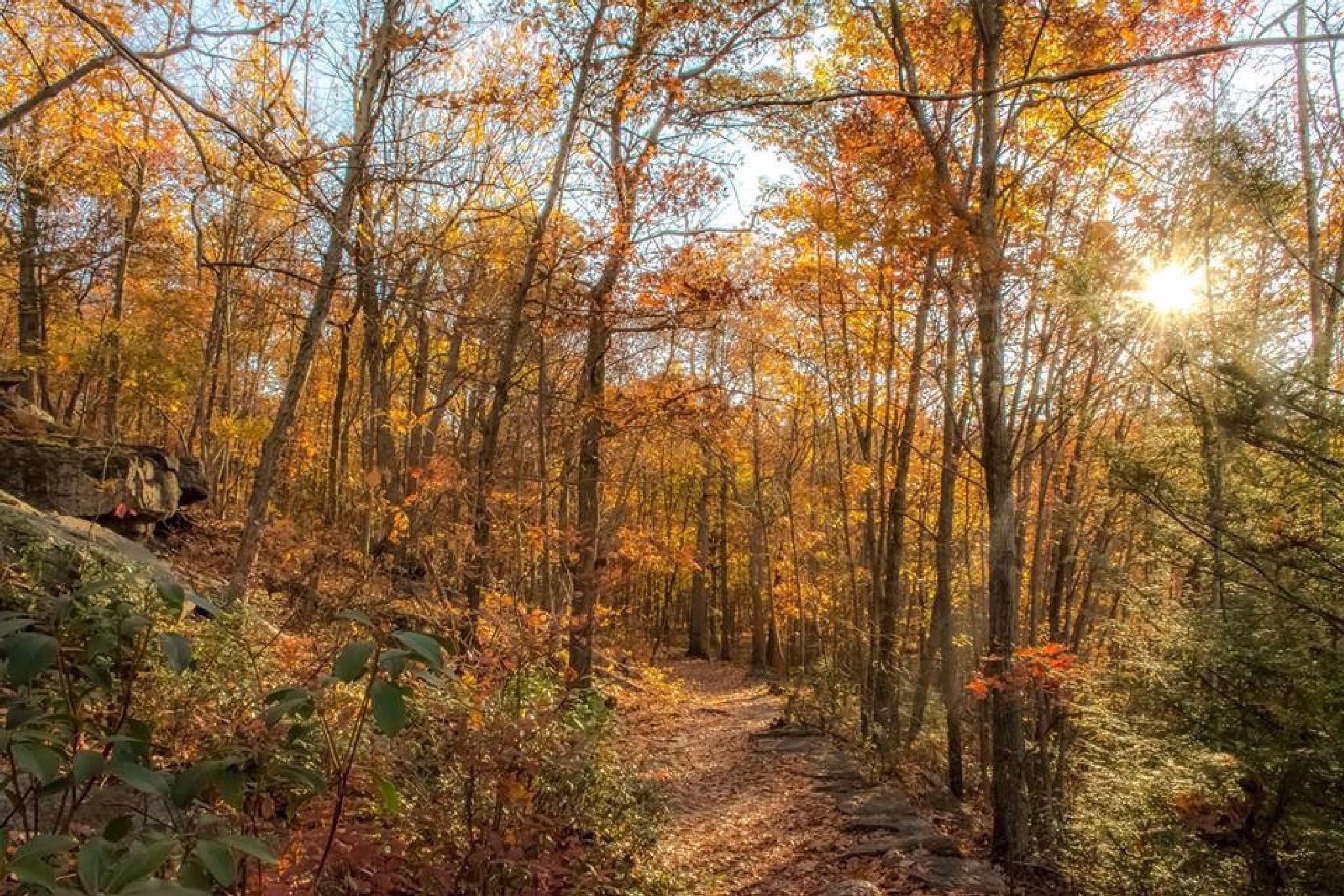 Autumn walk by Advenini