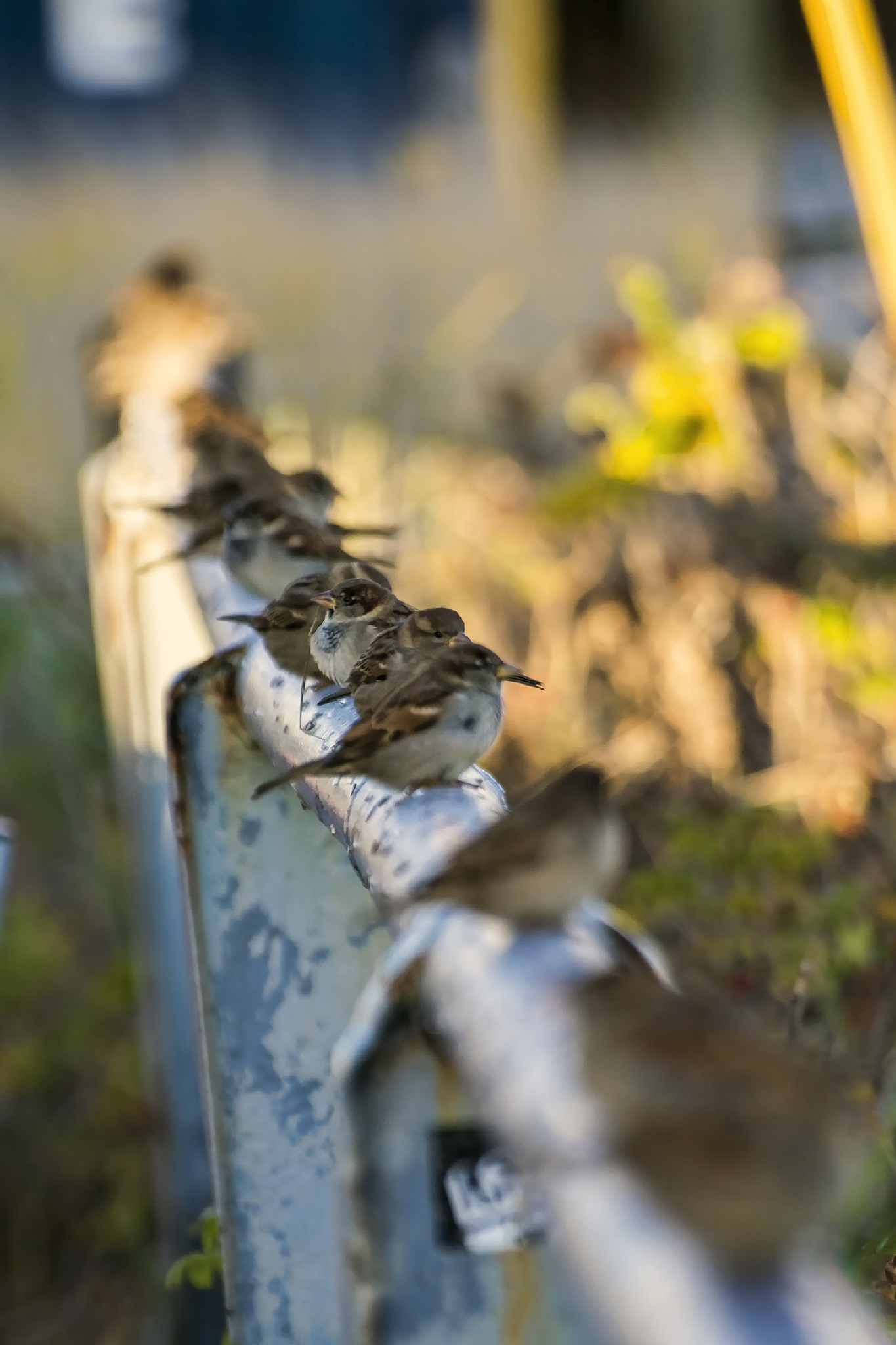 Sparrows at the beach by KatNeeL