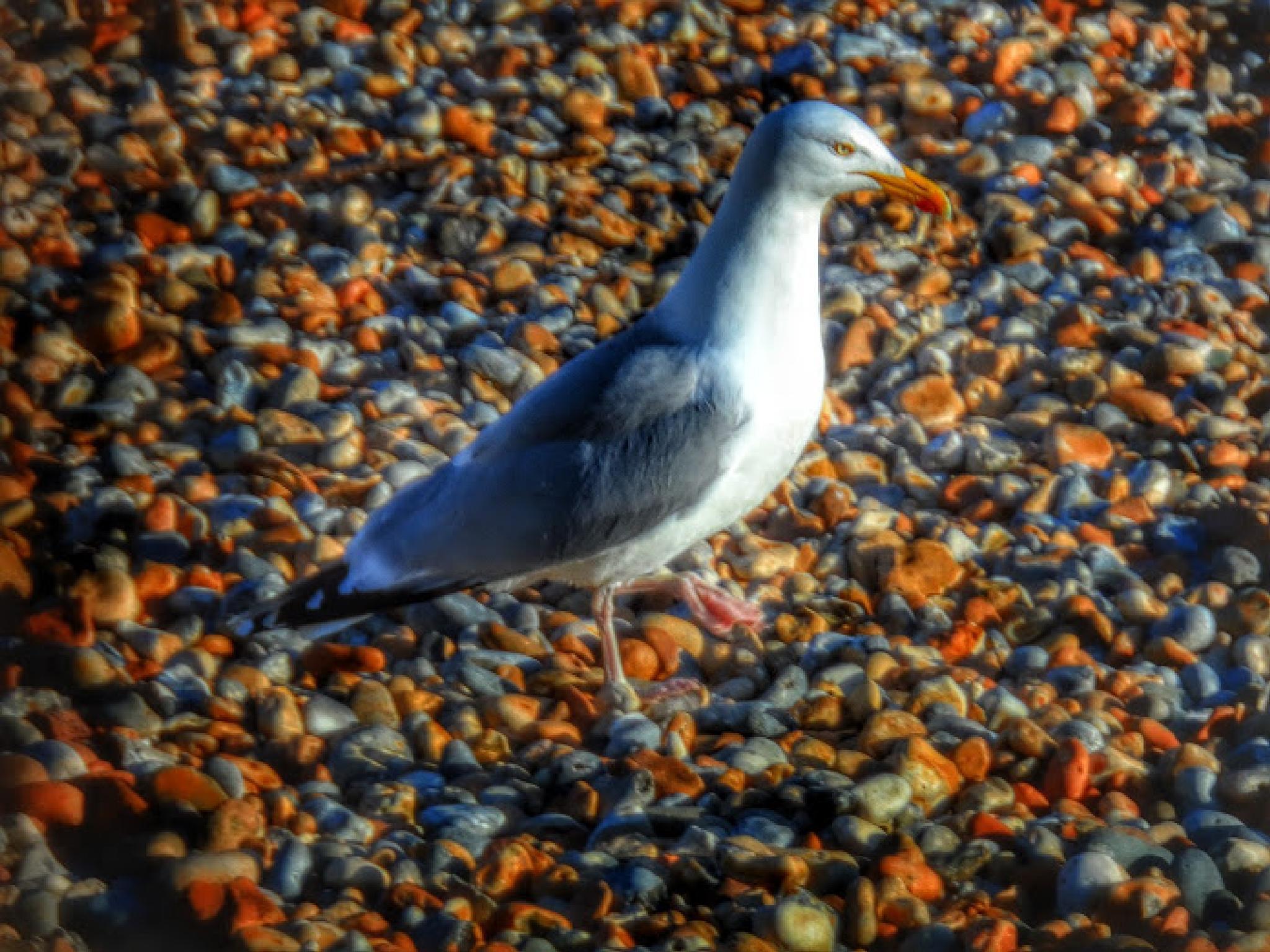 Gull by Jonathan Wood