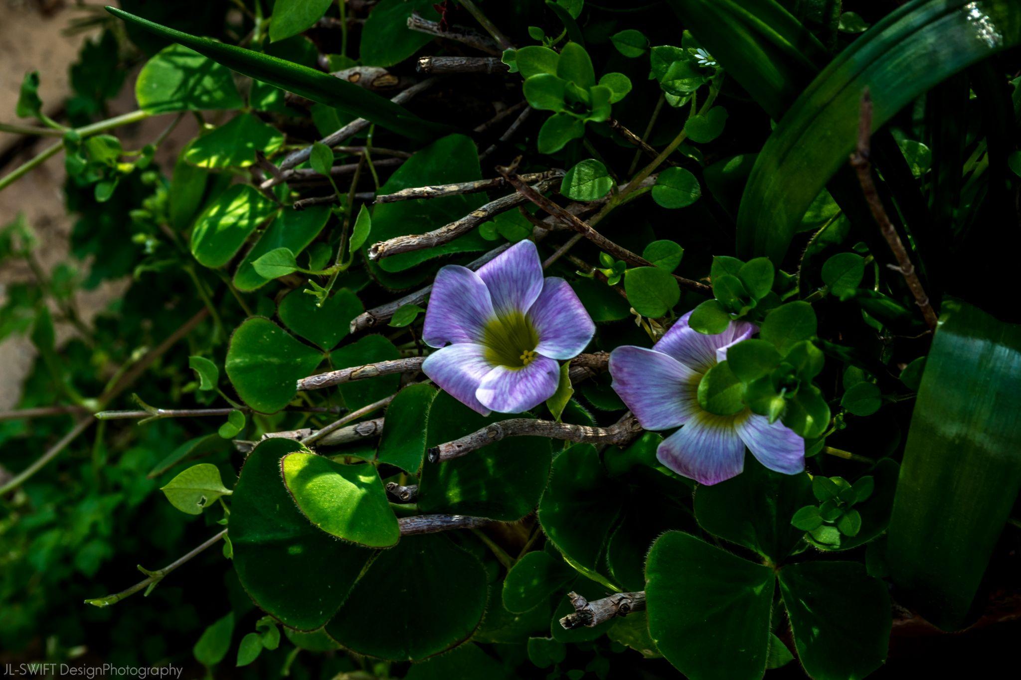 Flowers - Bluebells by JLSWIFTdesign