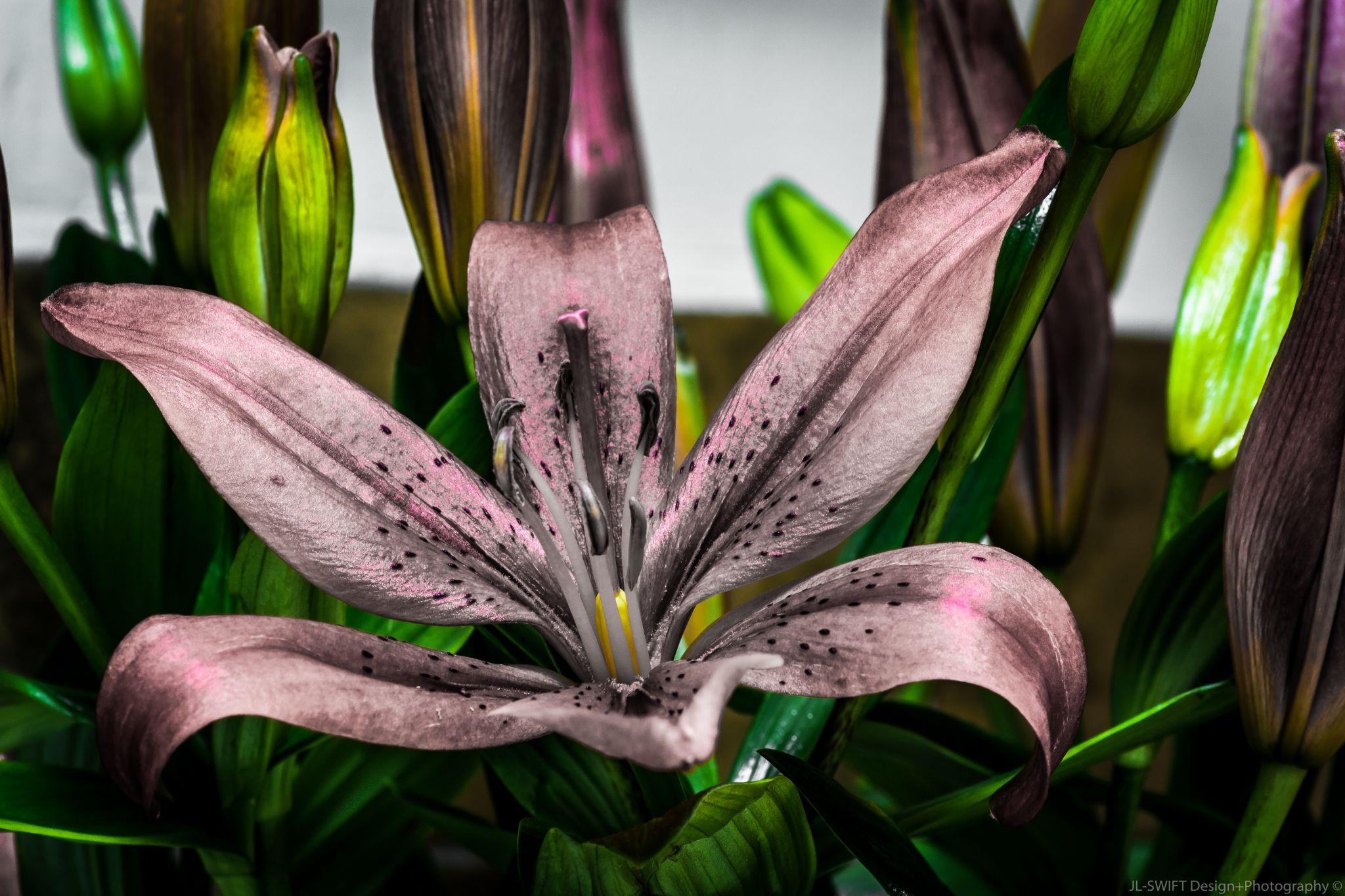 Flowers - SilverPink by JLSWIFTdesign