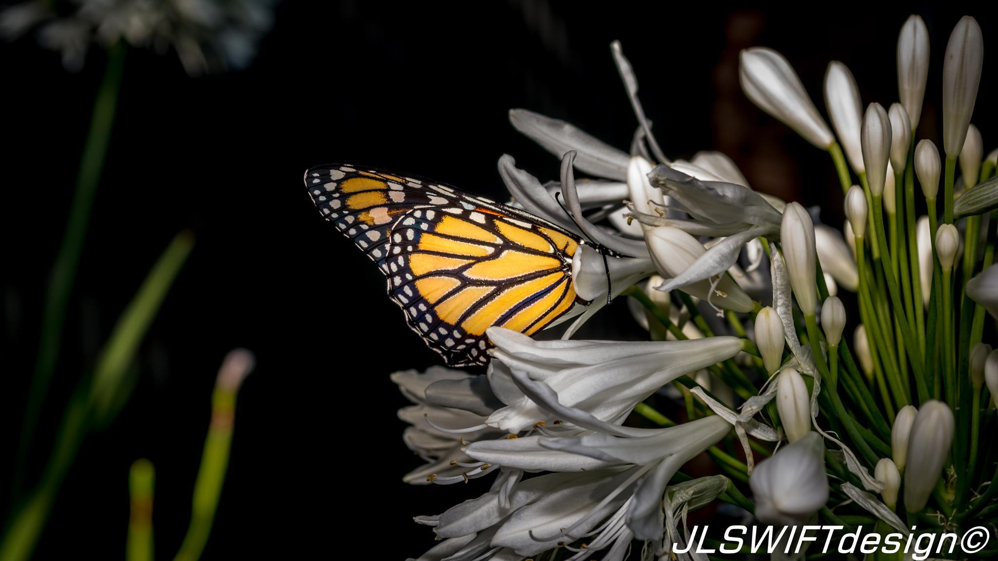 Butterfly_and_Flower photo Jordan Lia JLSWIFTdesign by JLSWIFTdesign