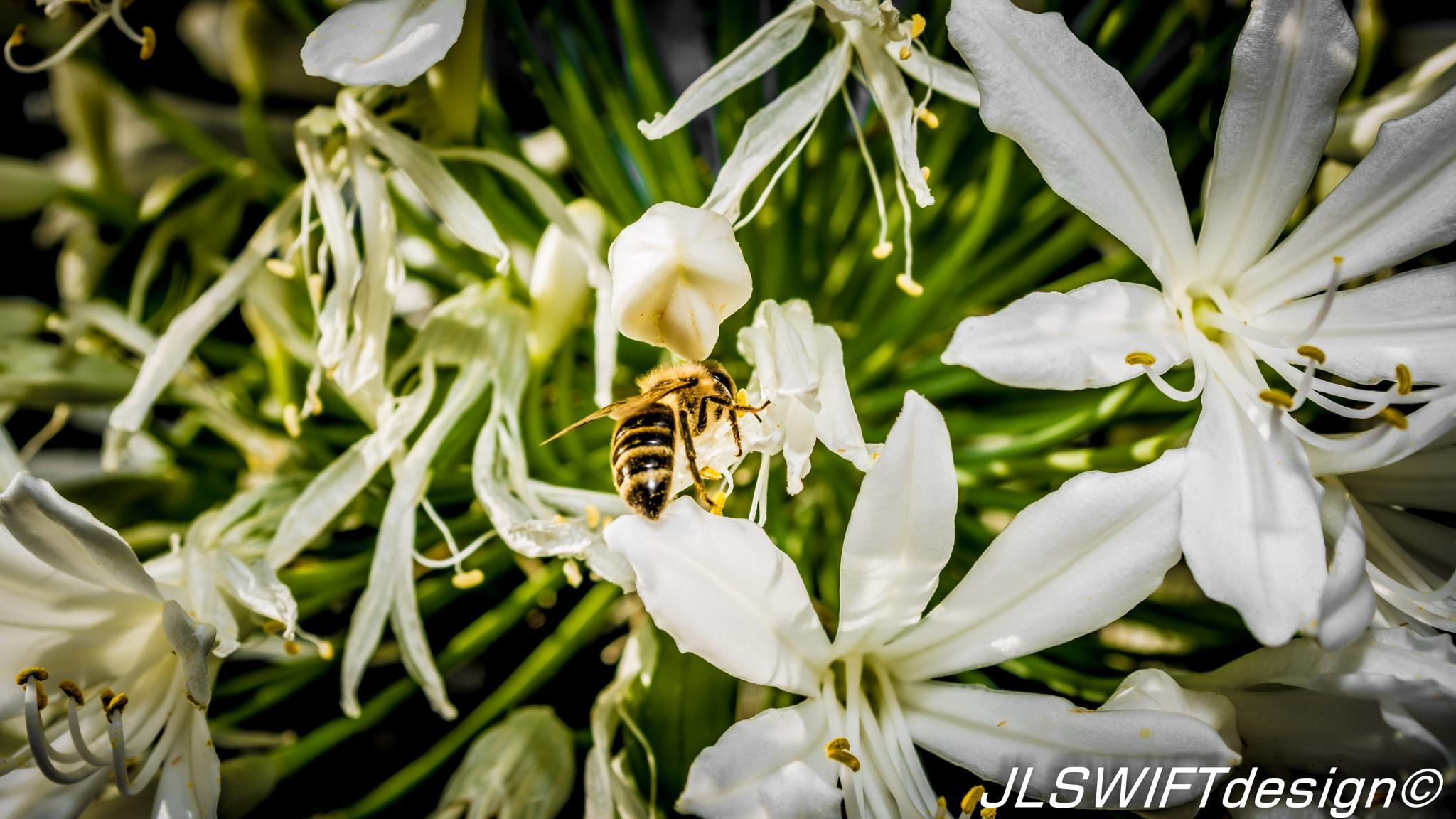 Bees_and_Flower003 photo Jordan Lia JLSWIFTdesign by JLSWIFTdesign