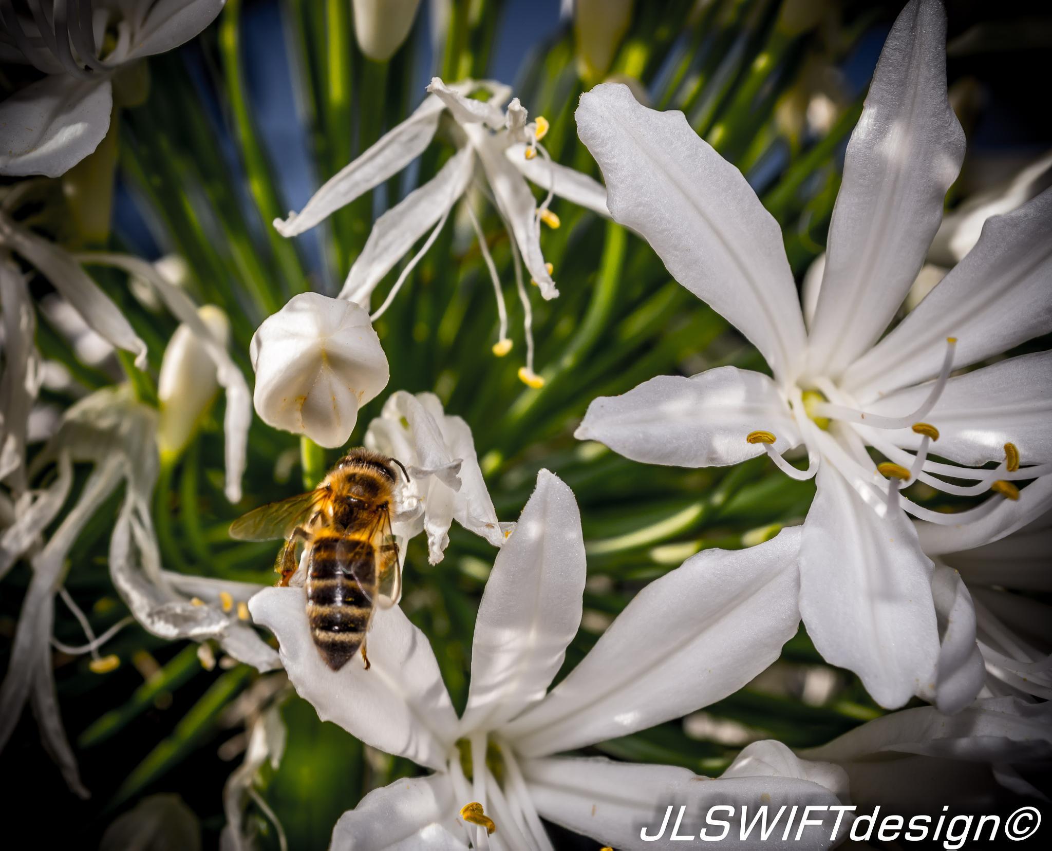 Bees_and_Flower000 photo Jordan Lia JLSWIFTdesign  by JLSWIFTdesign