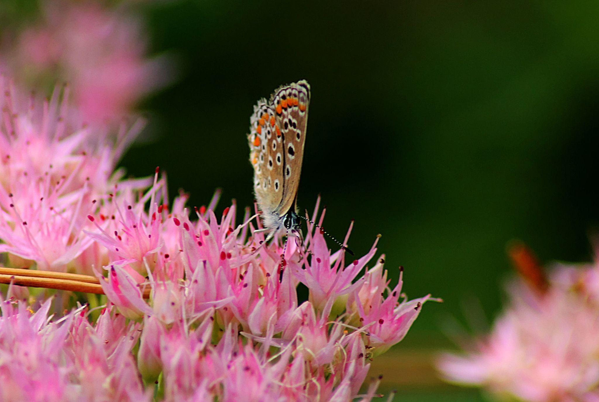 float like a butterfly by Laura Petrova