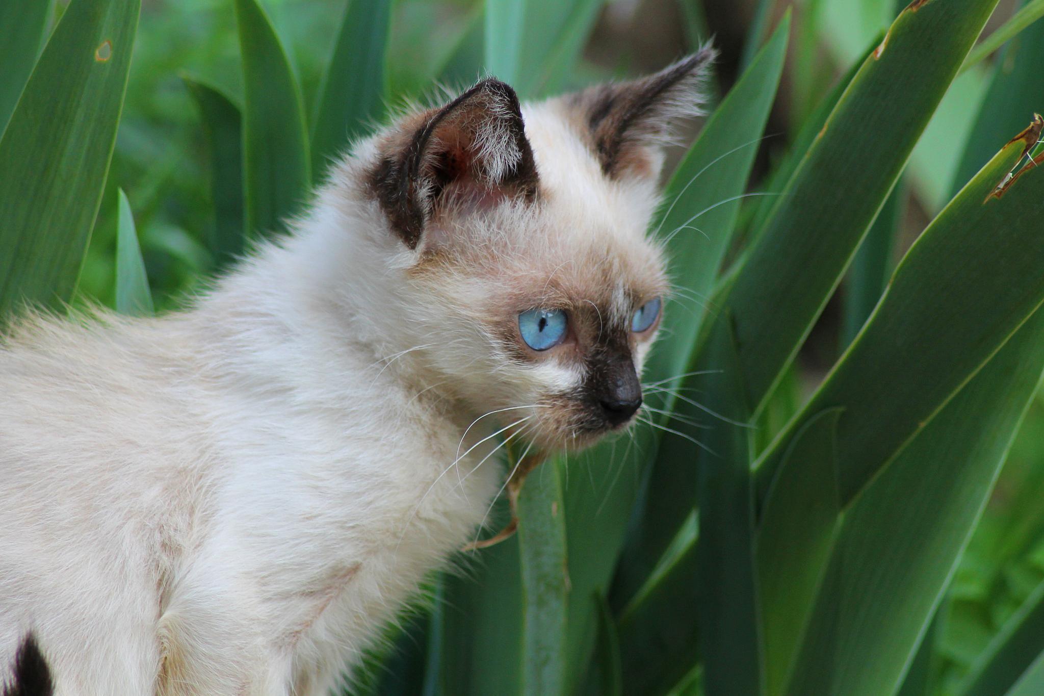 a little cat by Laura Petrova