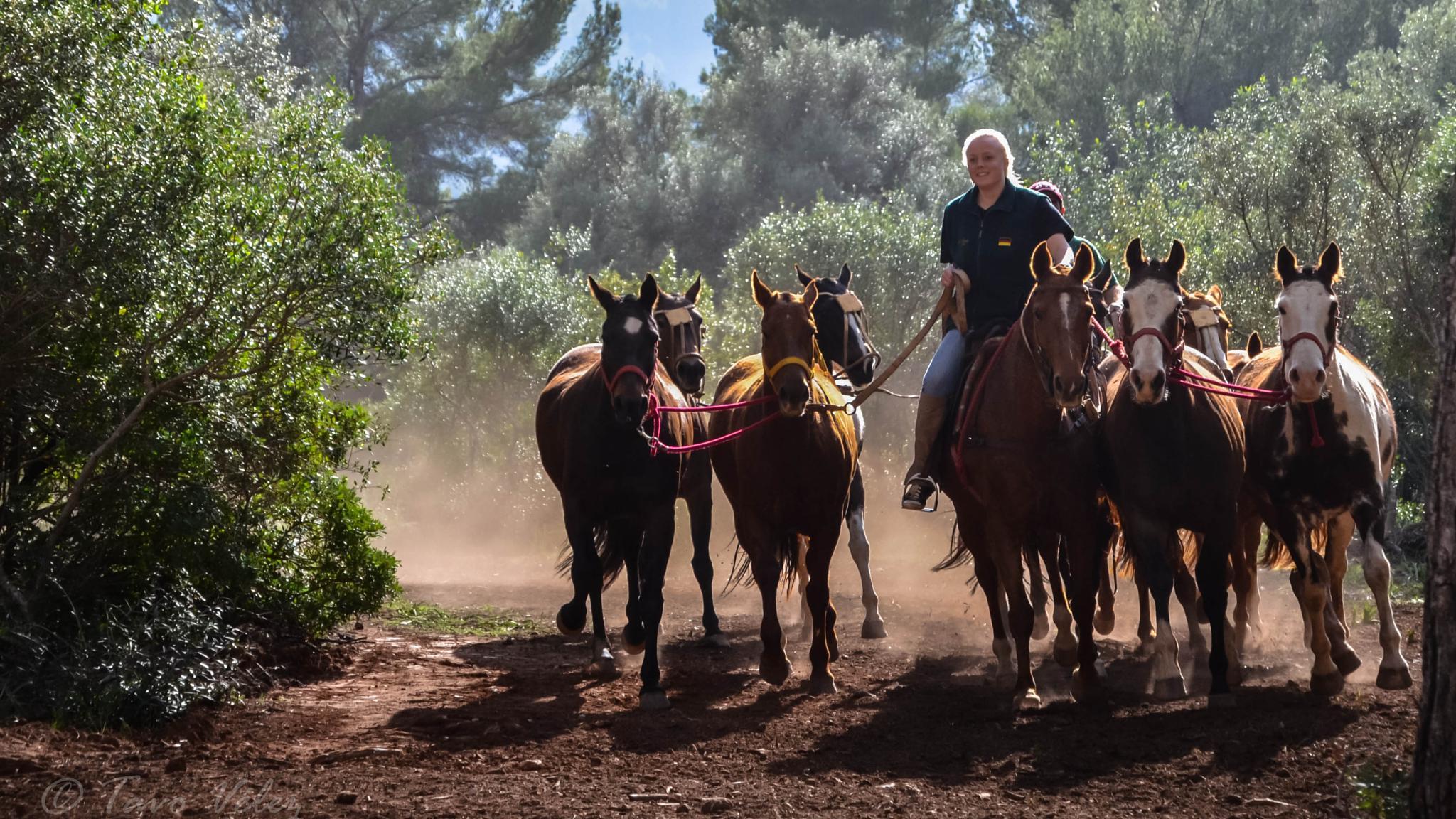 Horses training  by Tavo