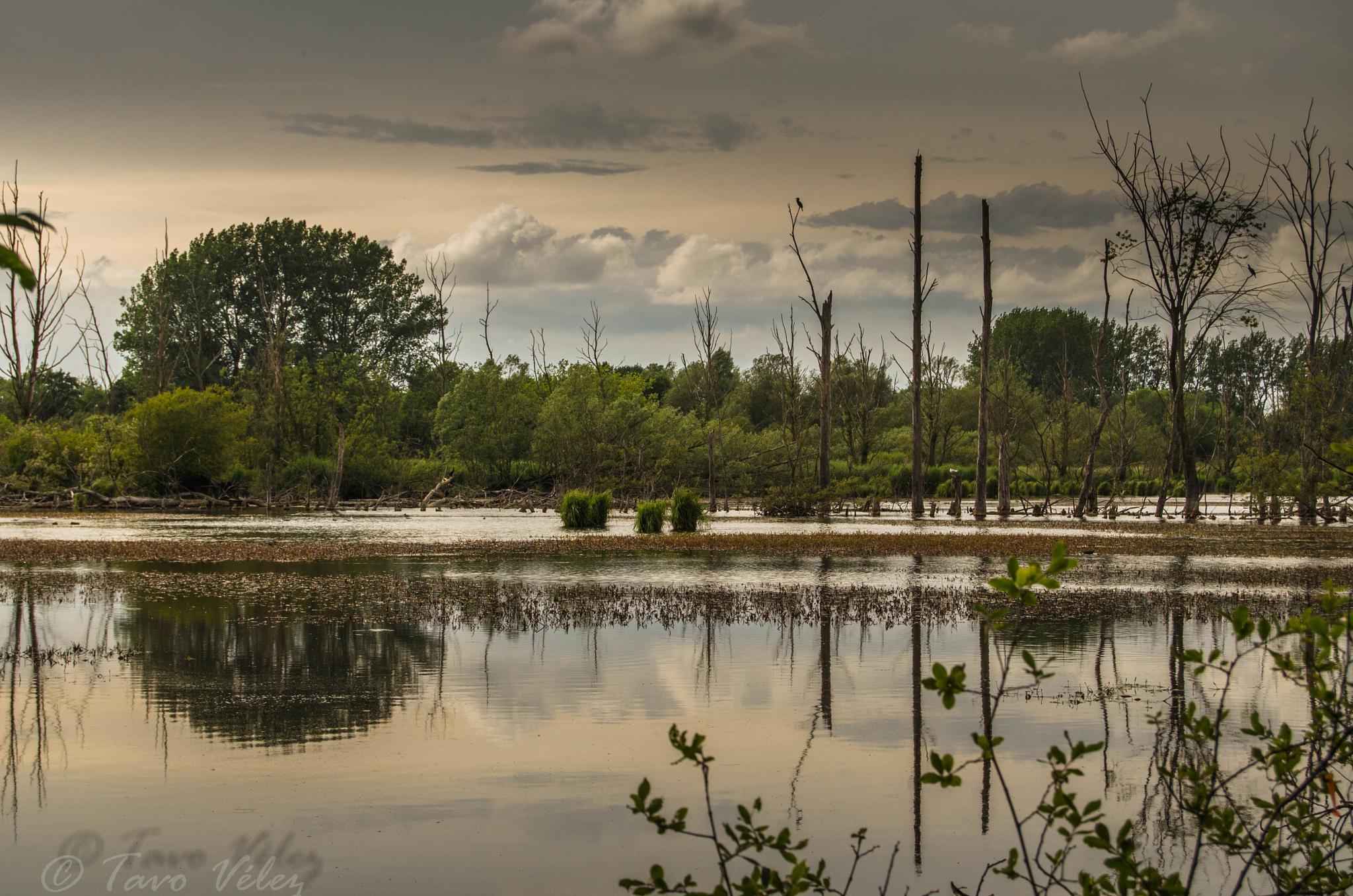 Photo in Landscape #lake #water #sky #tree #meadows #cloud