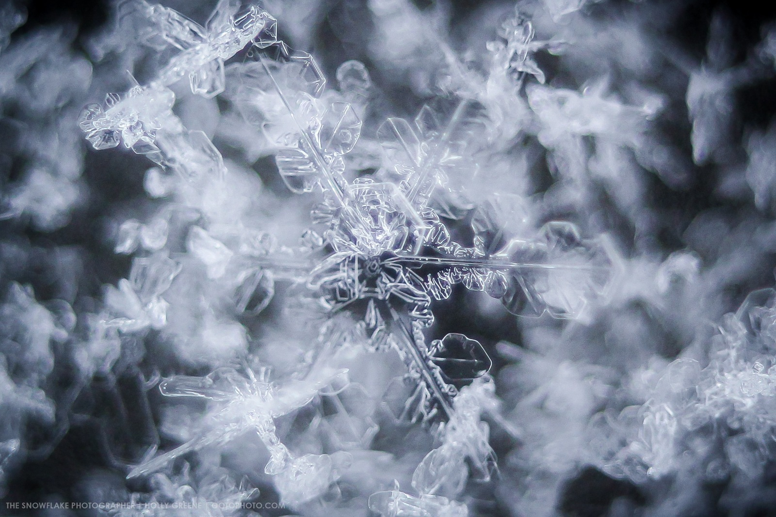 Photo in Macro #snowflakes #snowflake #ice #crystal #ice crystal #macro #macro photography #formation #ootophoto