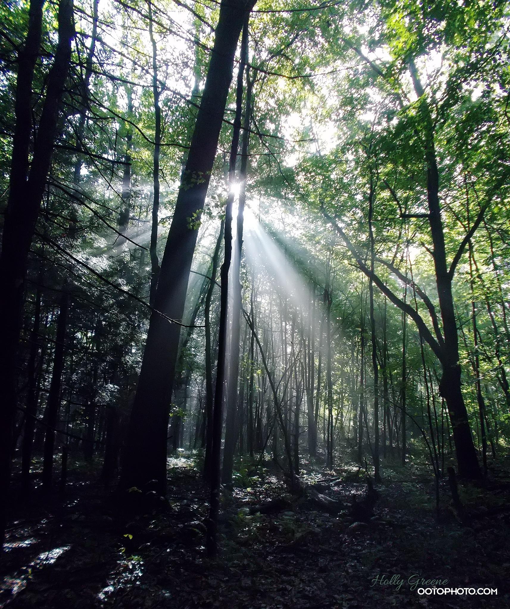 Shine bright. by Holly Schreckengost Greene