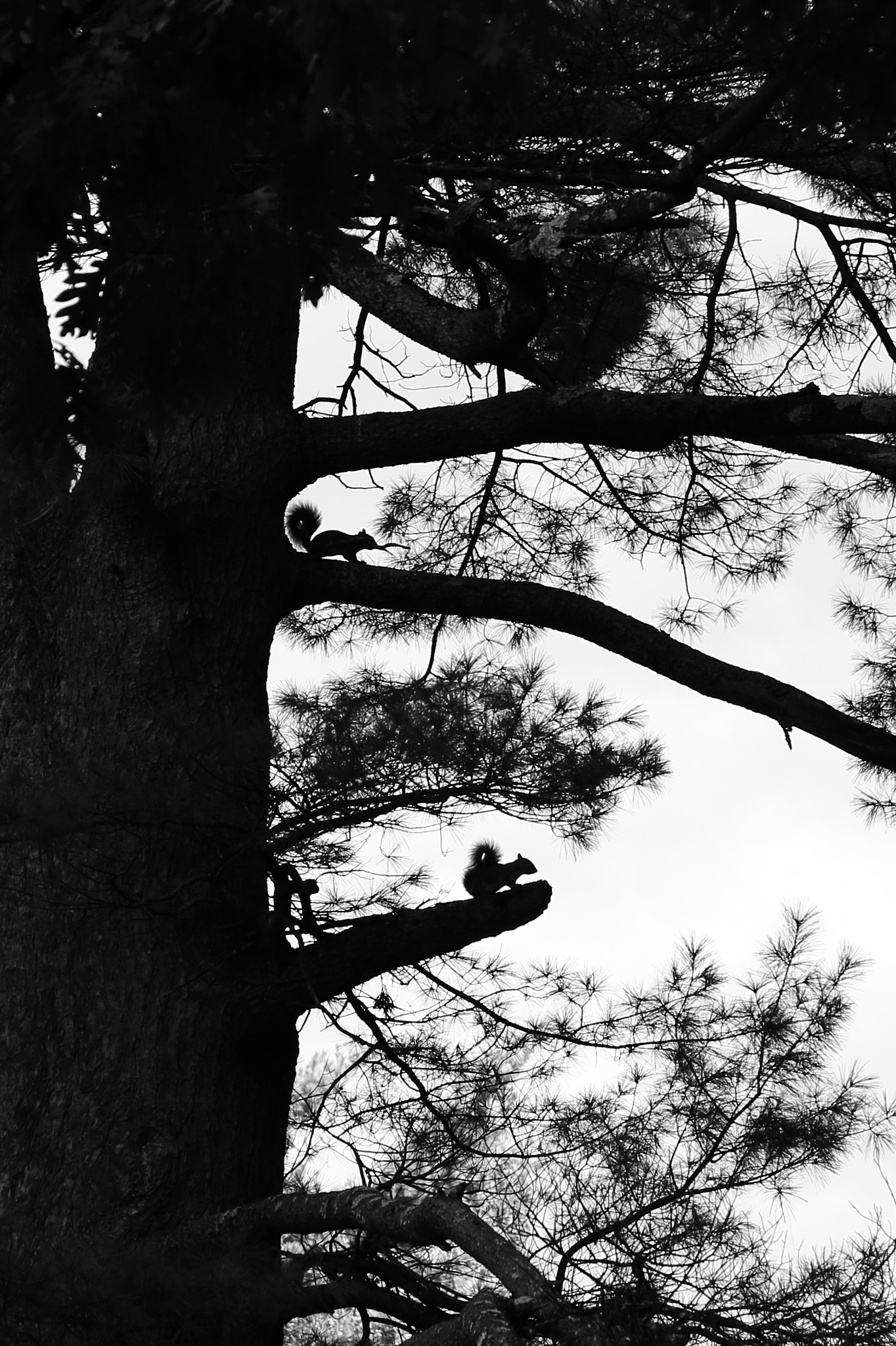 Out on a limb by Holly Schreckengost Greene