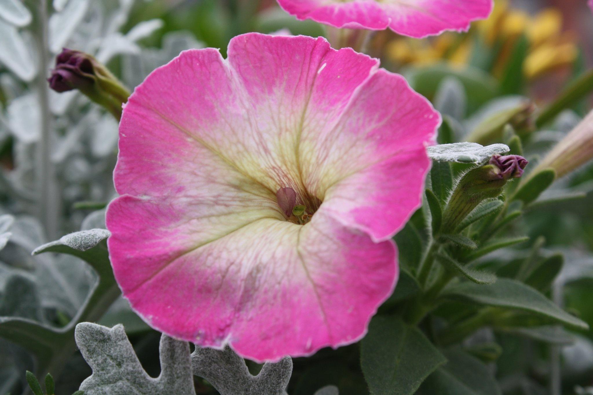 A Flower by shawn lynch