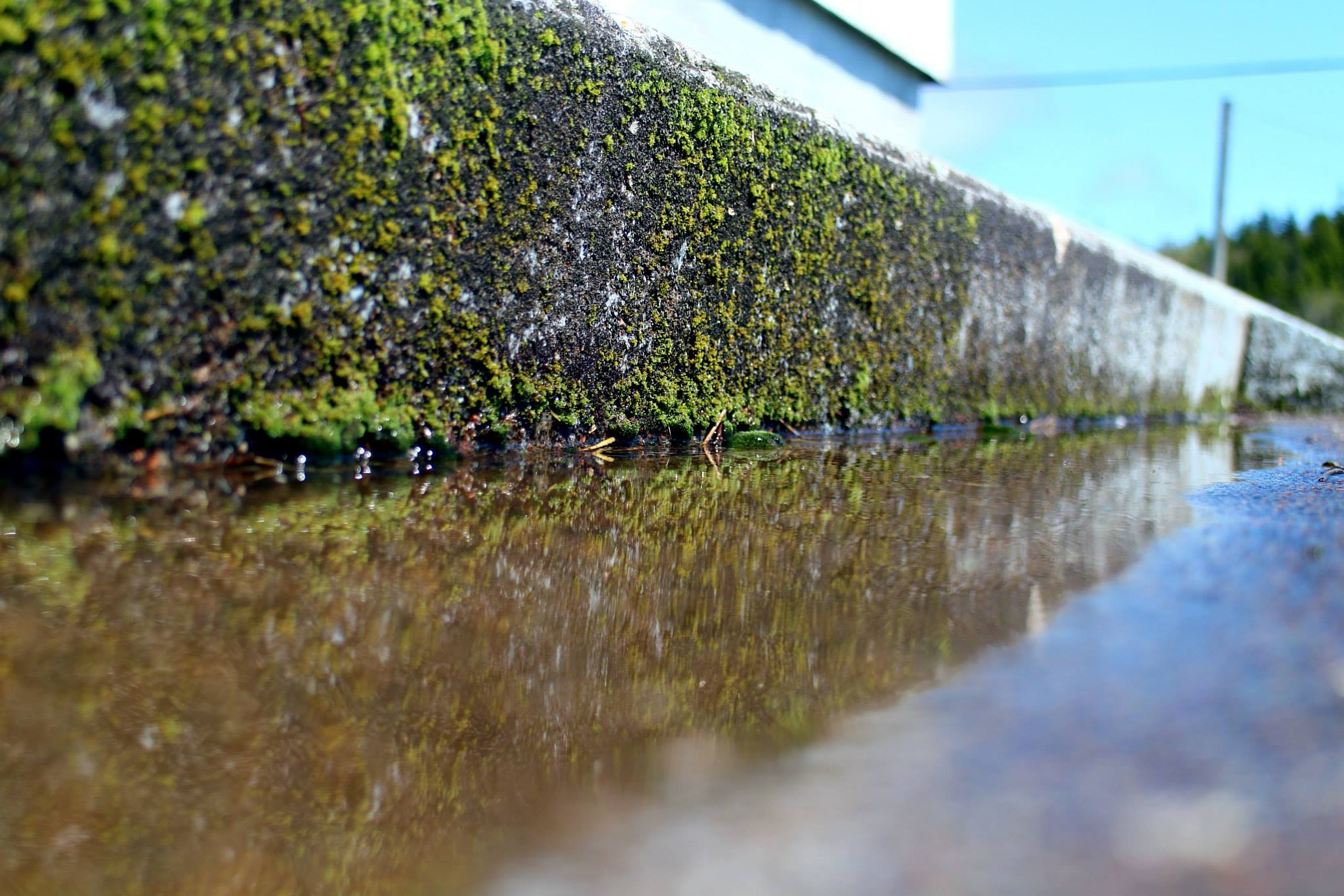 Moss grows on a step by shawn lynch