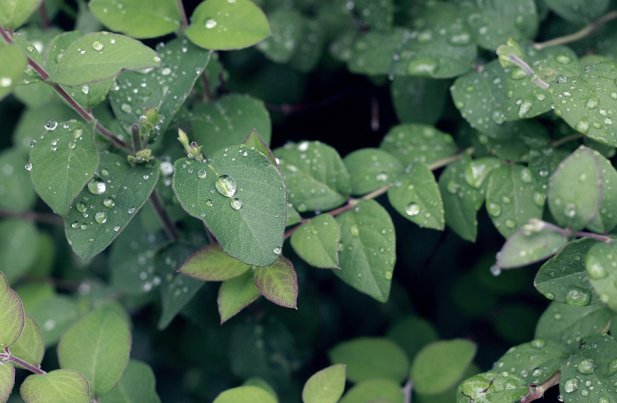 Rain dew by mircea.fotograf.az