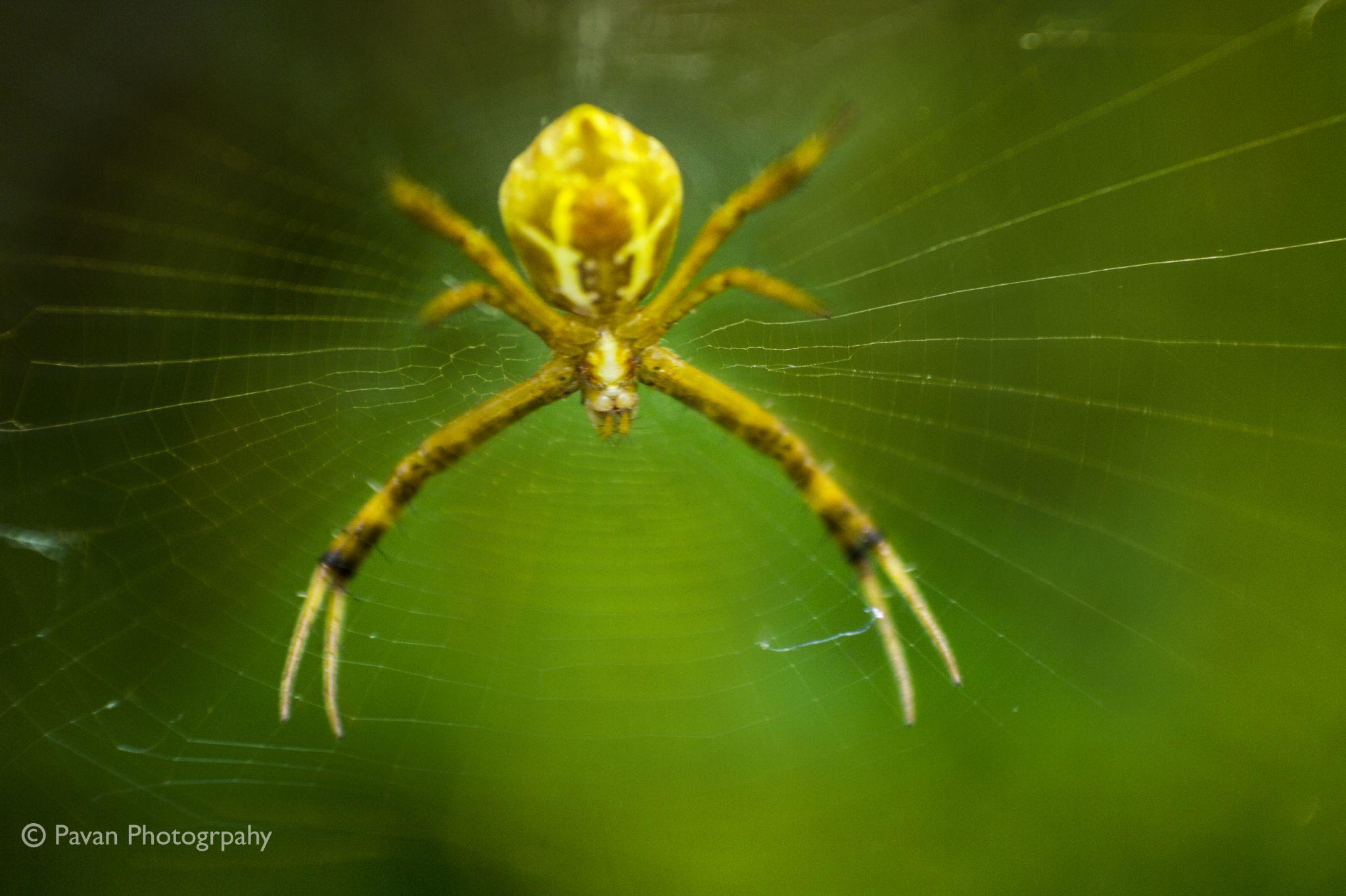 Spider by PAVAN KONATHAM