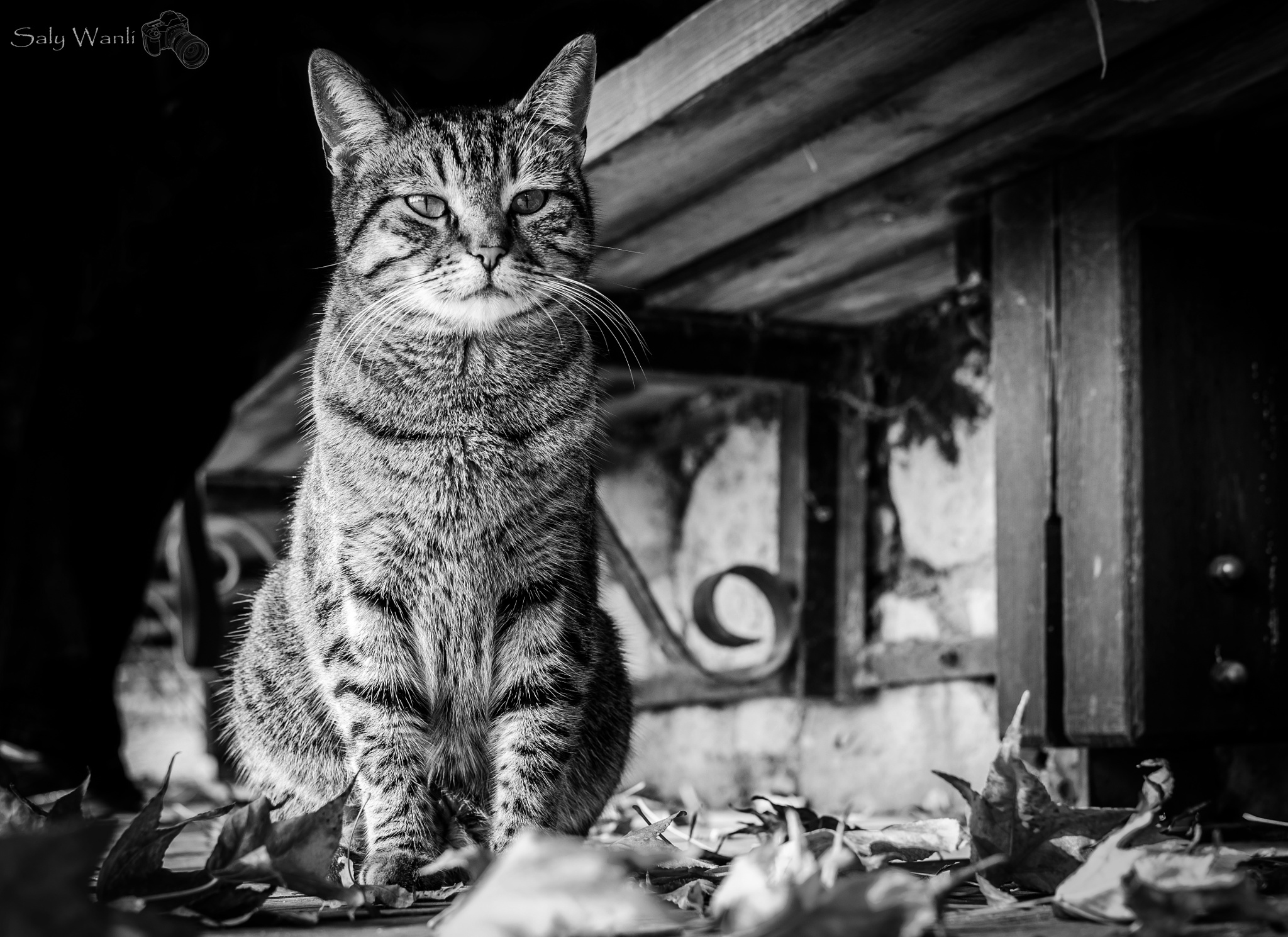 Cat by Saly.Wanli
