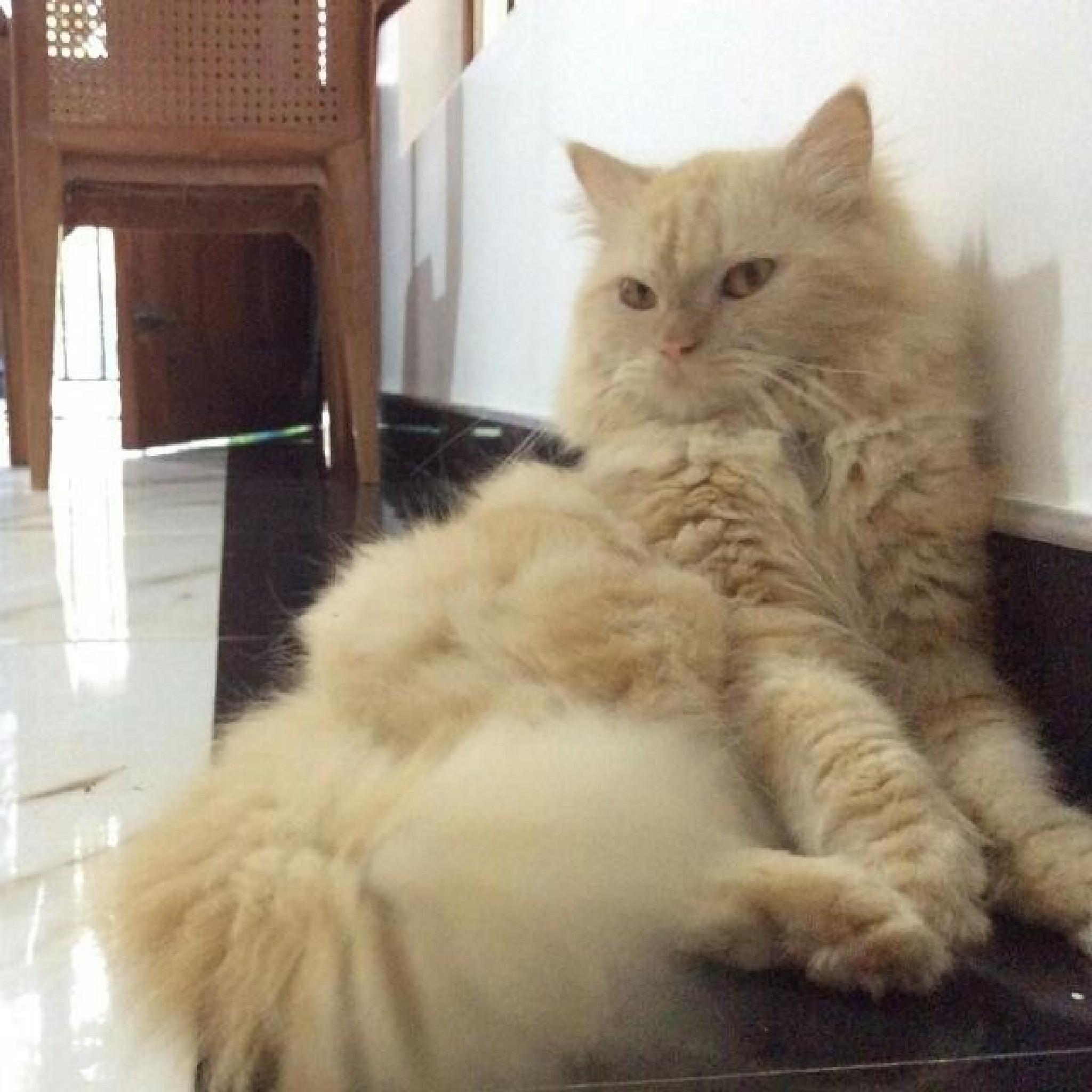 Cat by Mohamed Ajmeer