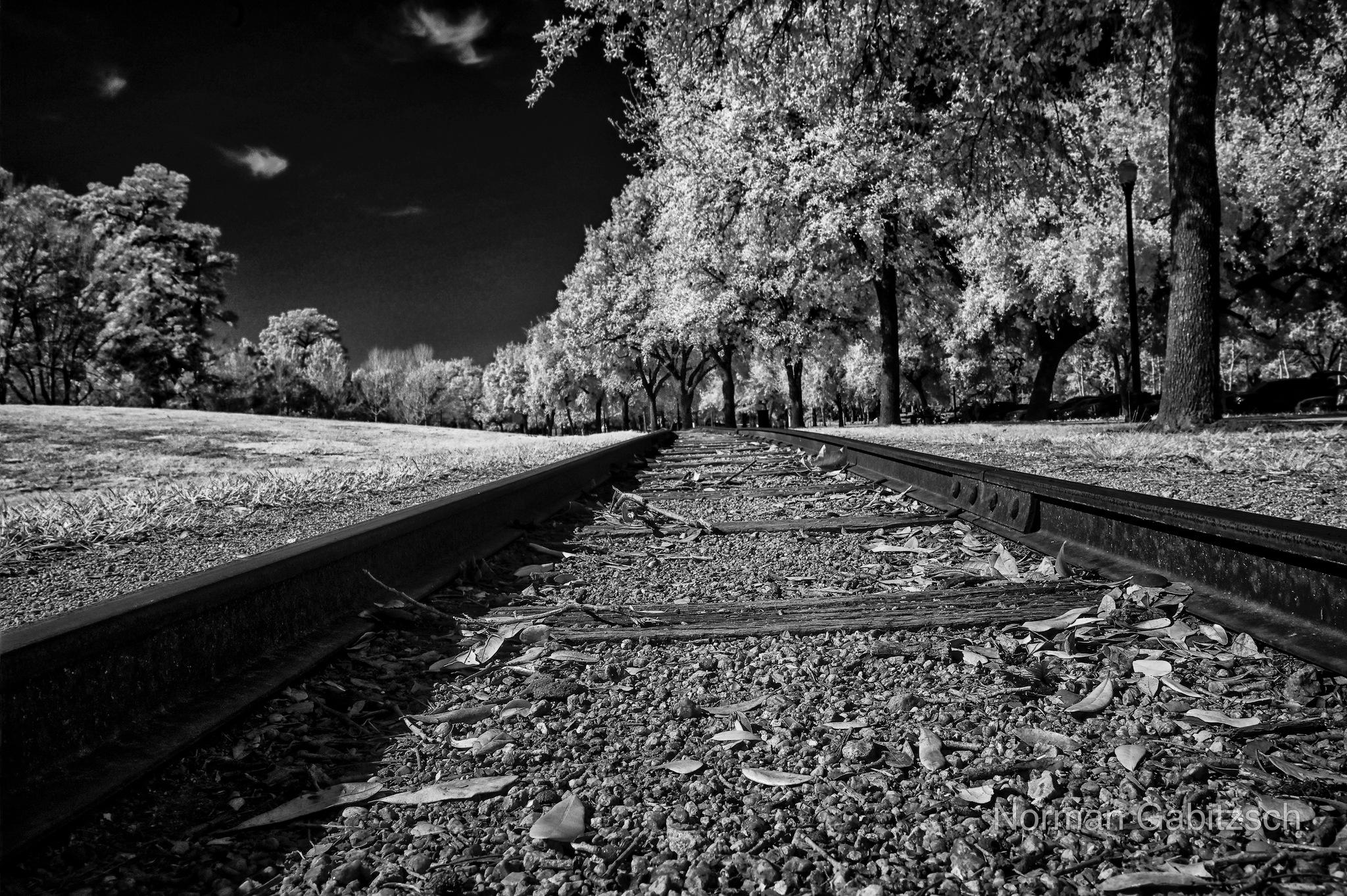 Photo in Black and White #houston #infrared #black and white #bw #bnw #b&w #monochrome #norman gabitzsch #houston photographer #youpic #outdoors #park #trees #black #nikon
