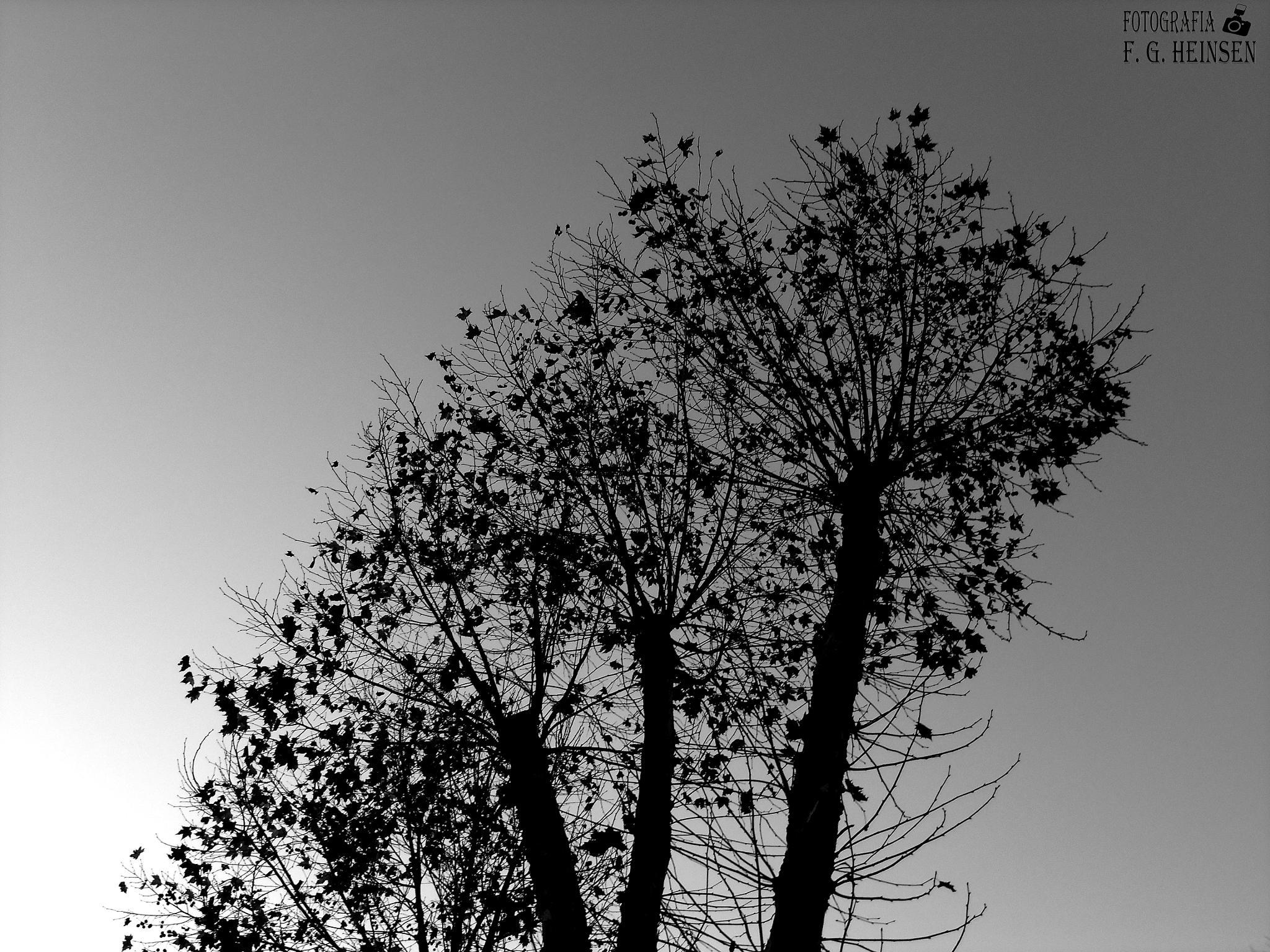 Nature by Fatima Gabrieli