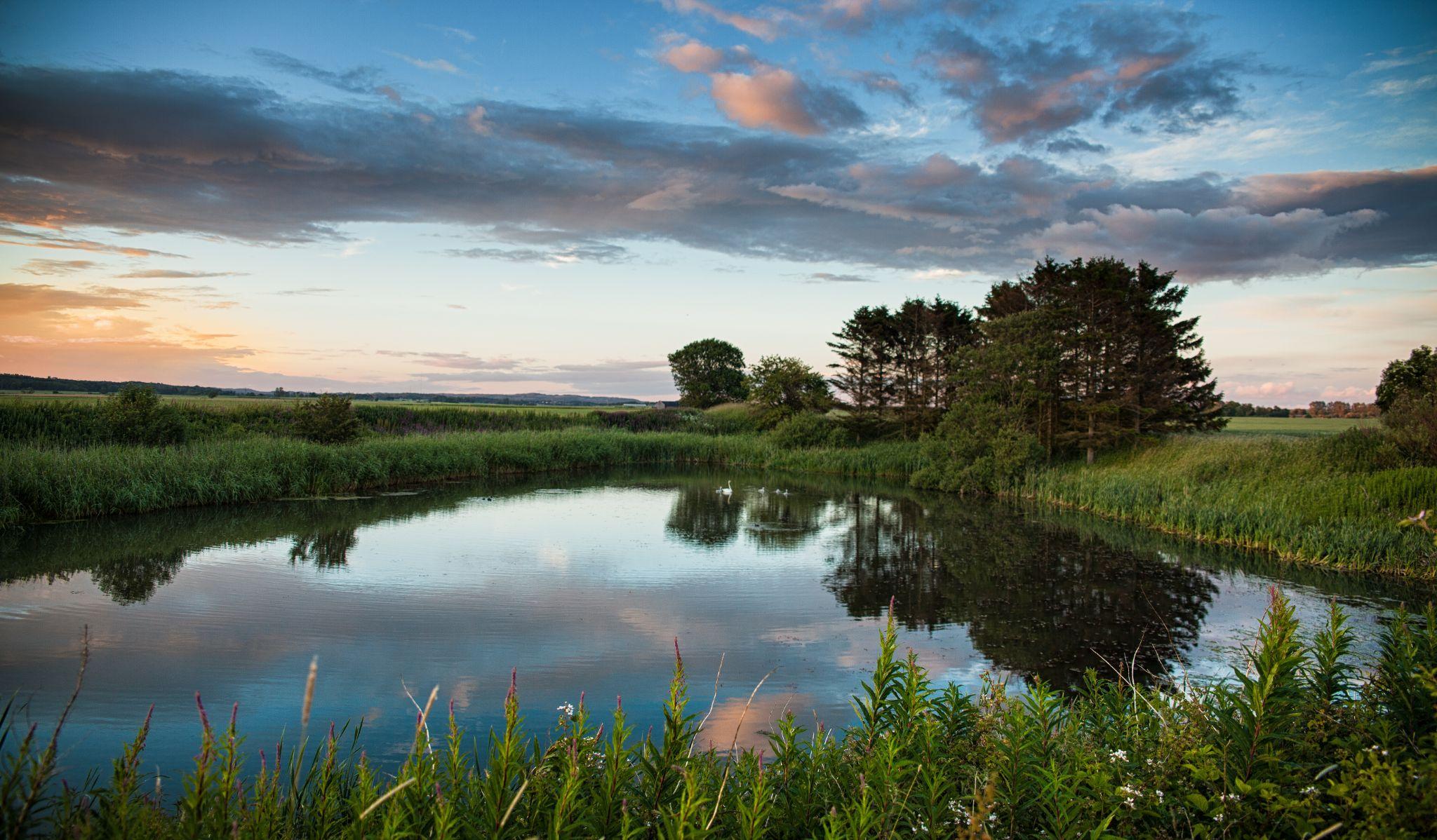 swan lake by Magnus Gudmundsson