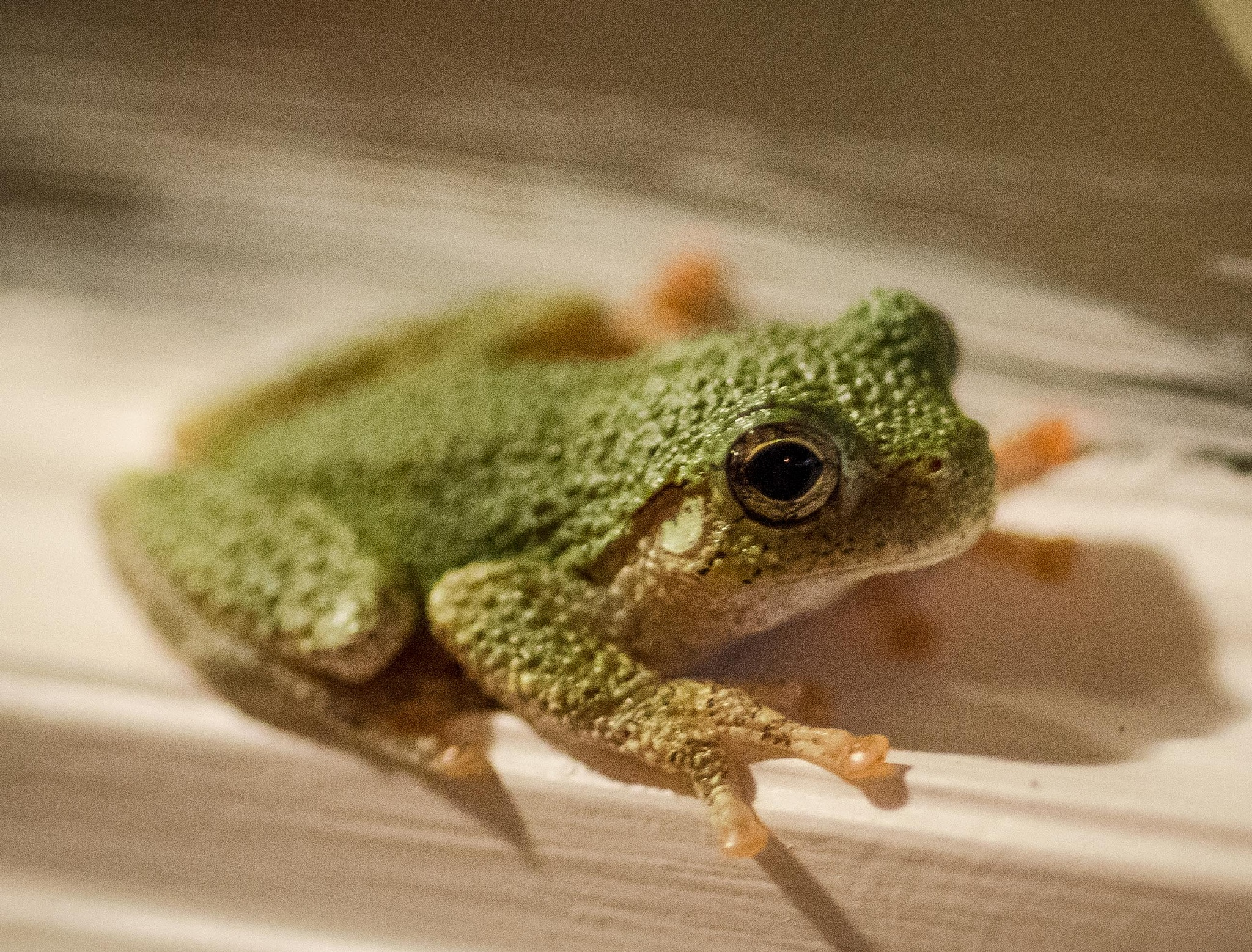 Miniature Frog by TerryLynn