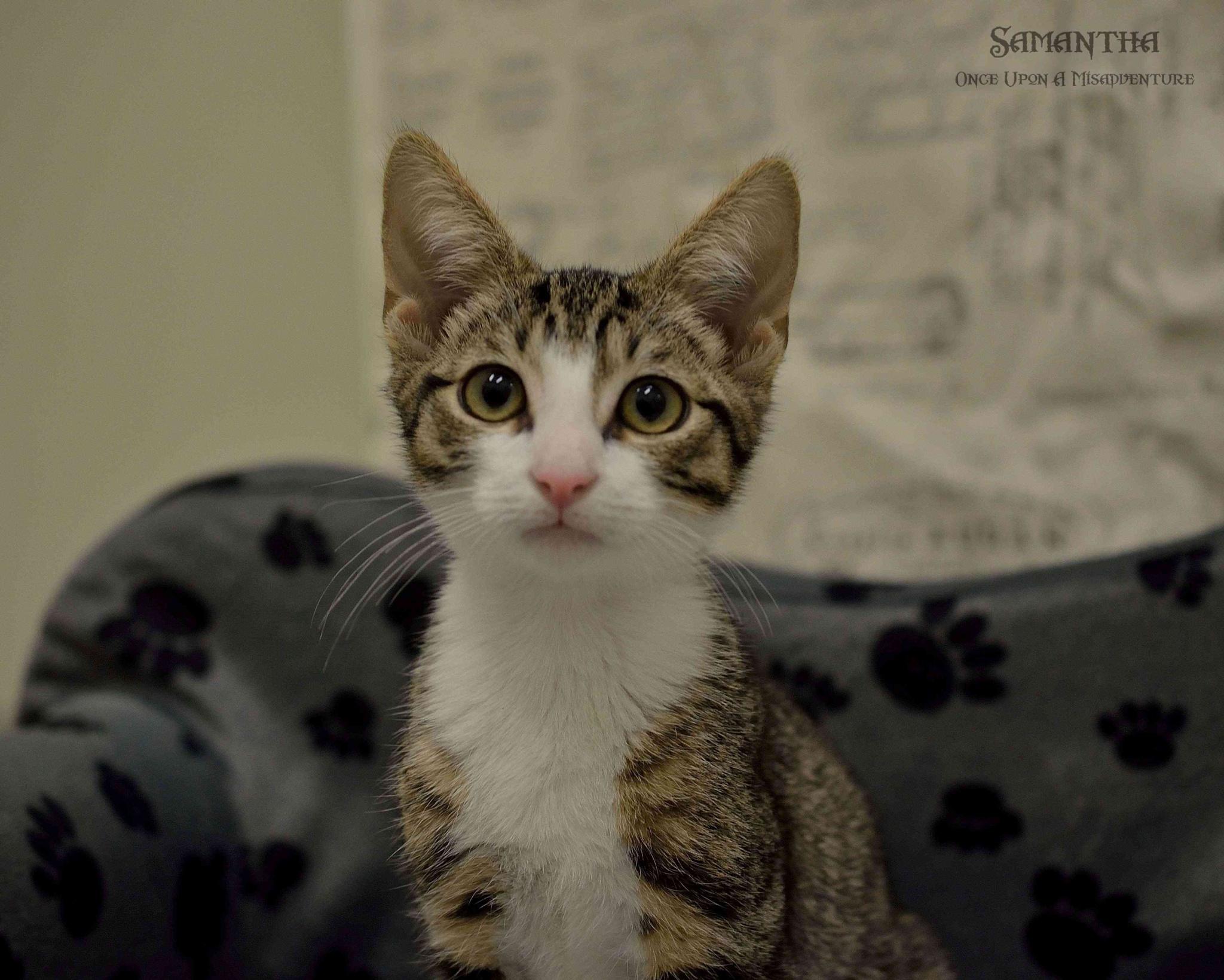 Photo in Animal #animal #cat #kitten #australia #adoption
