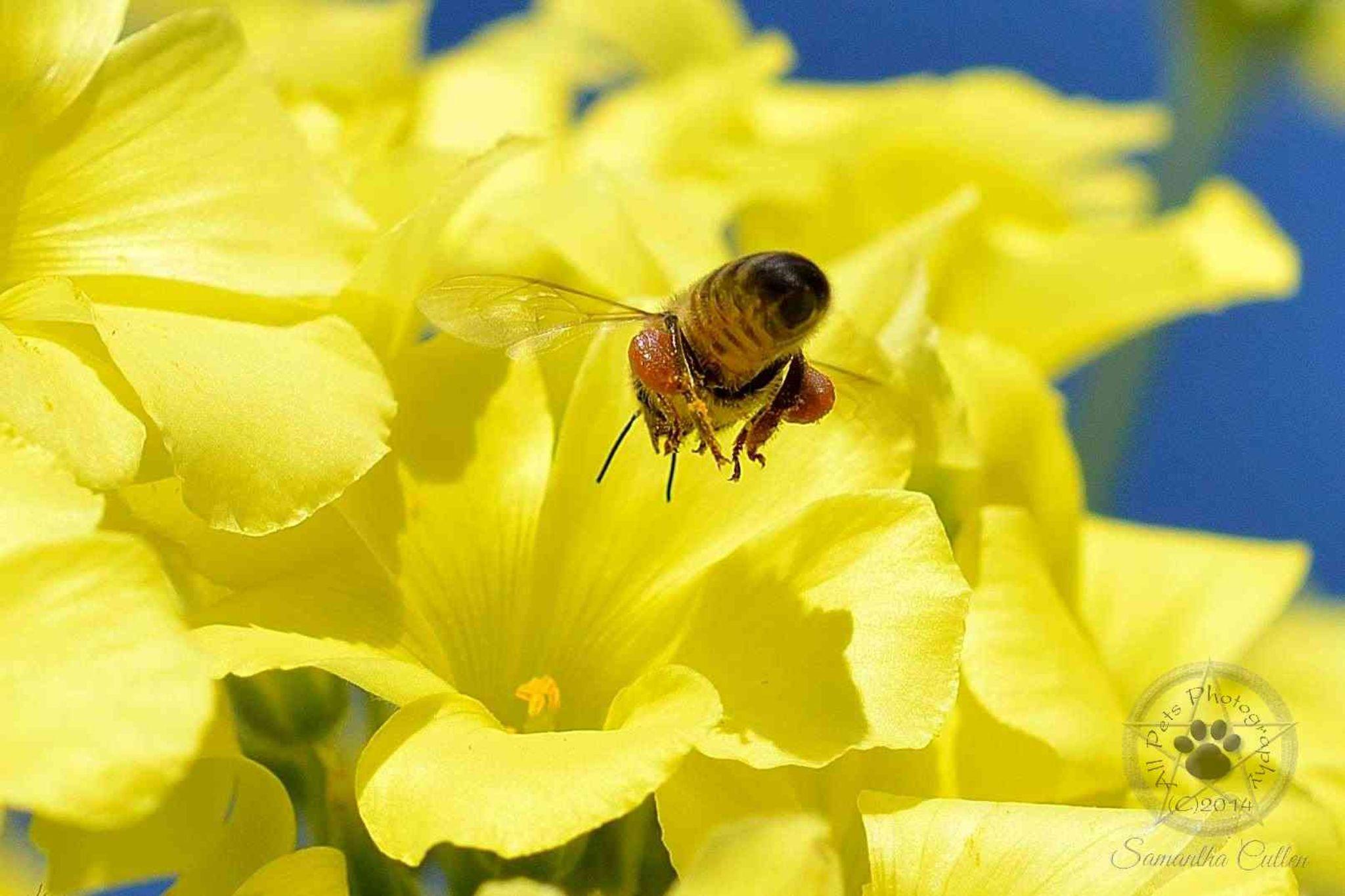 Bee by Samantha Cullen