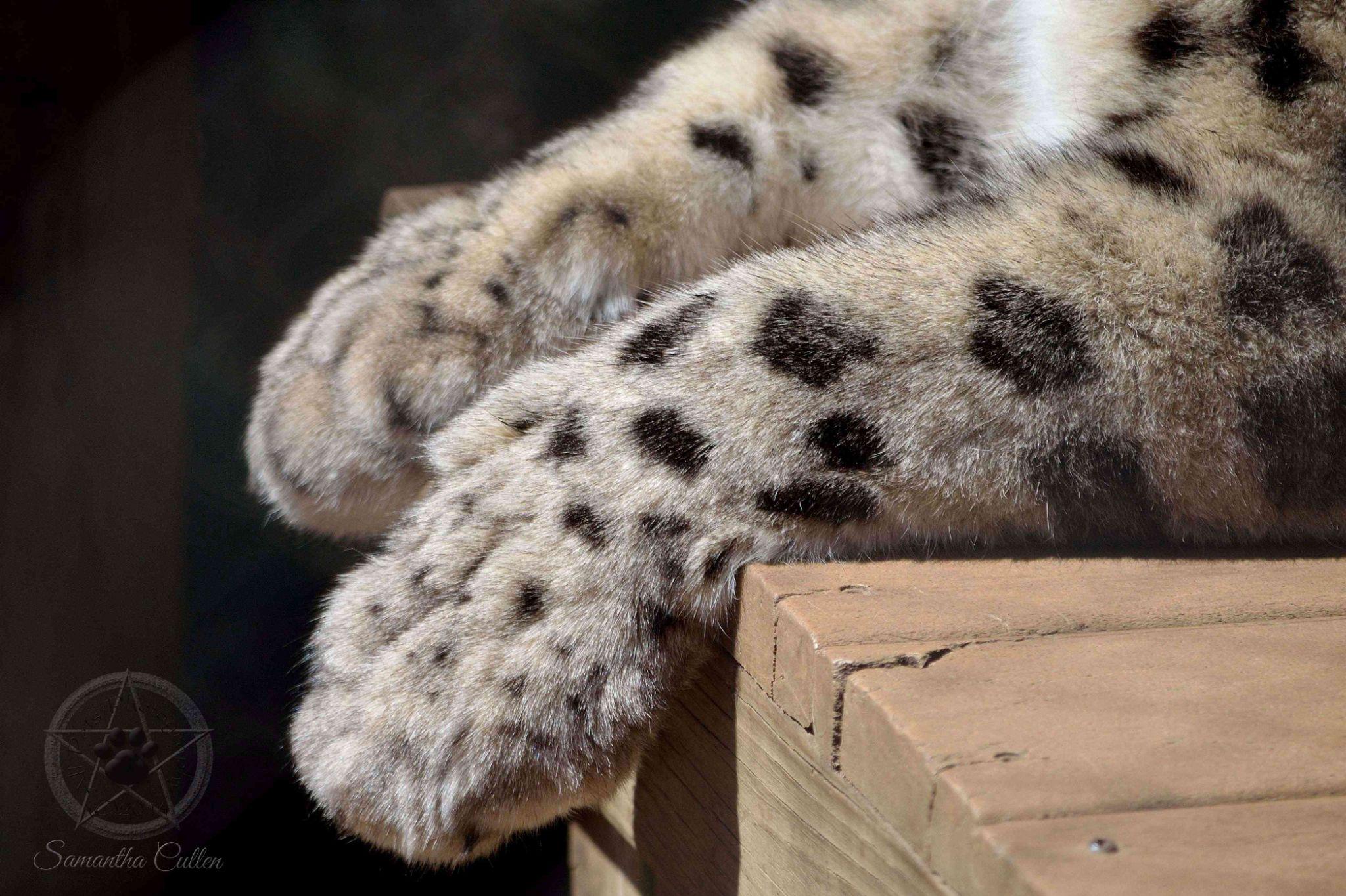 Paws by Samantha Cullen