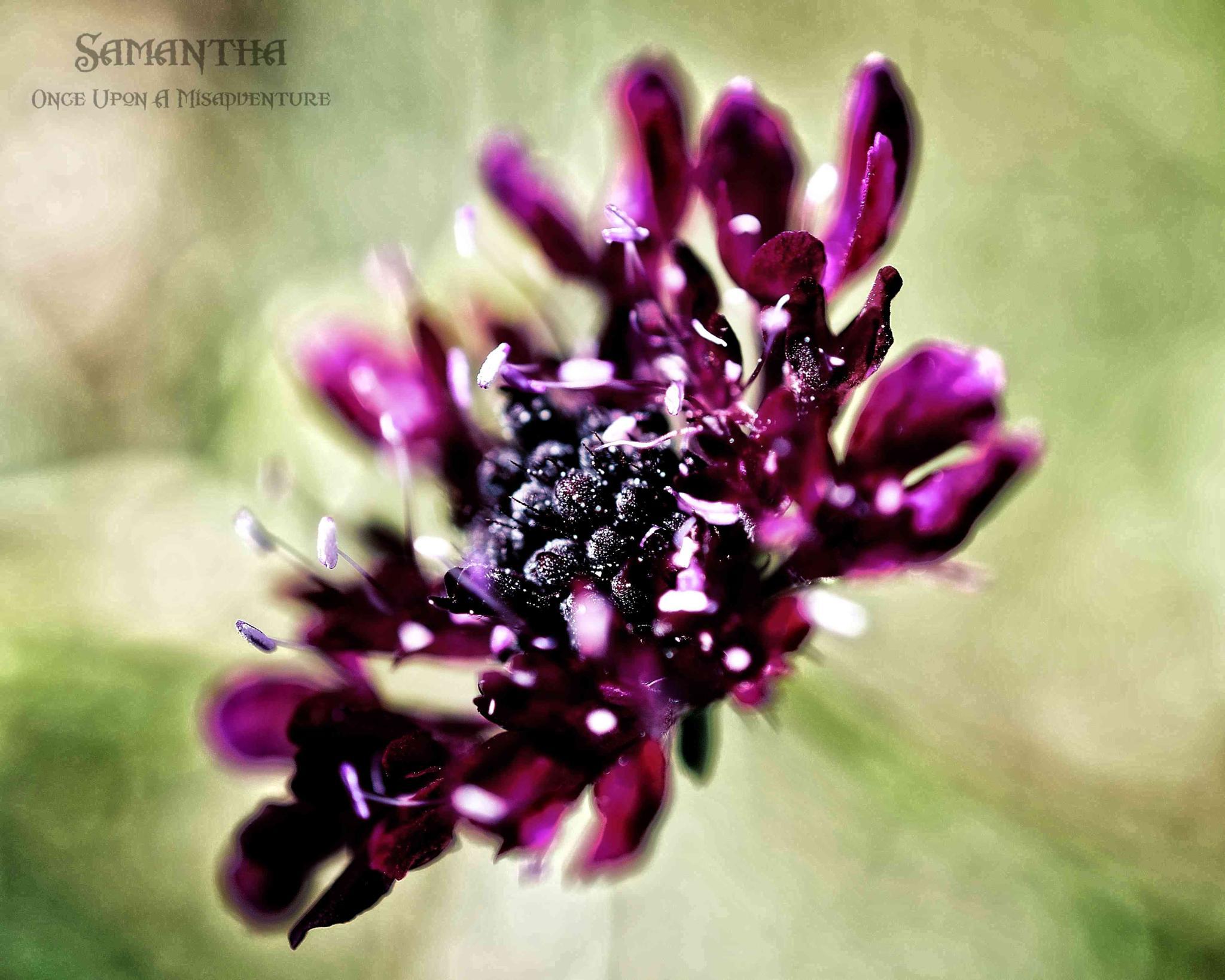 Wildflower by Samantha Cullen