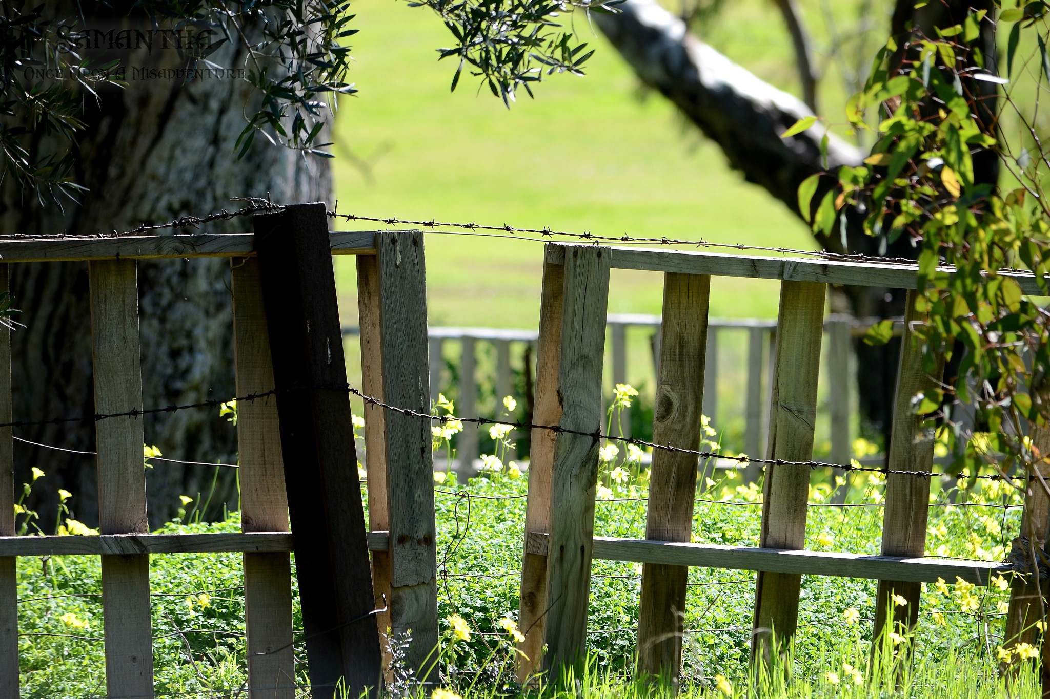 Fenced in by Samantha Cullen