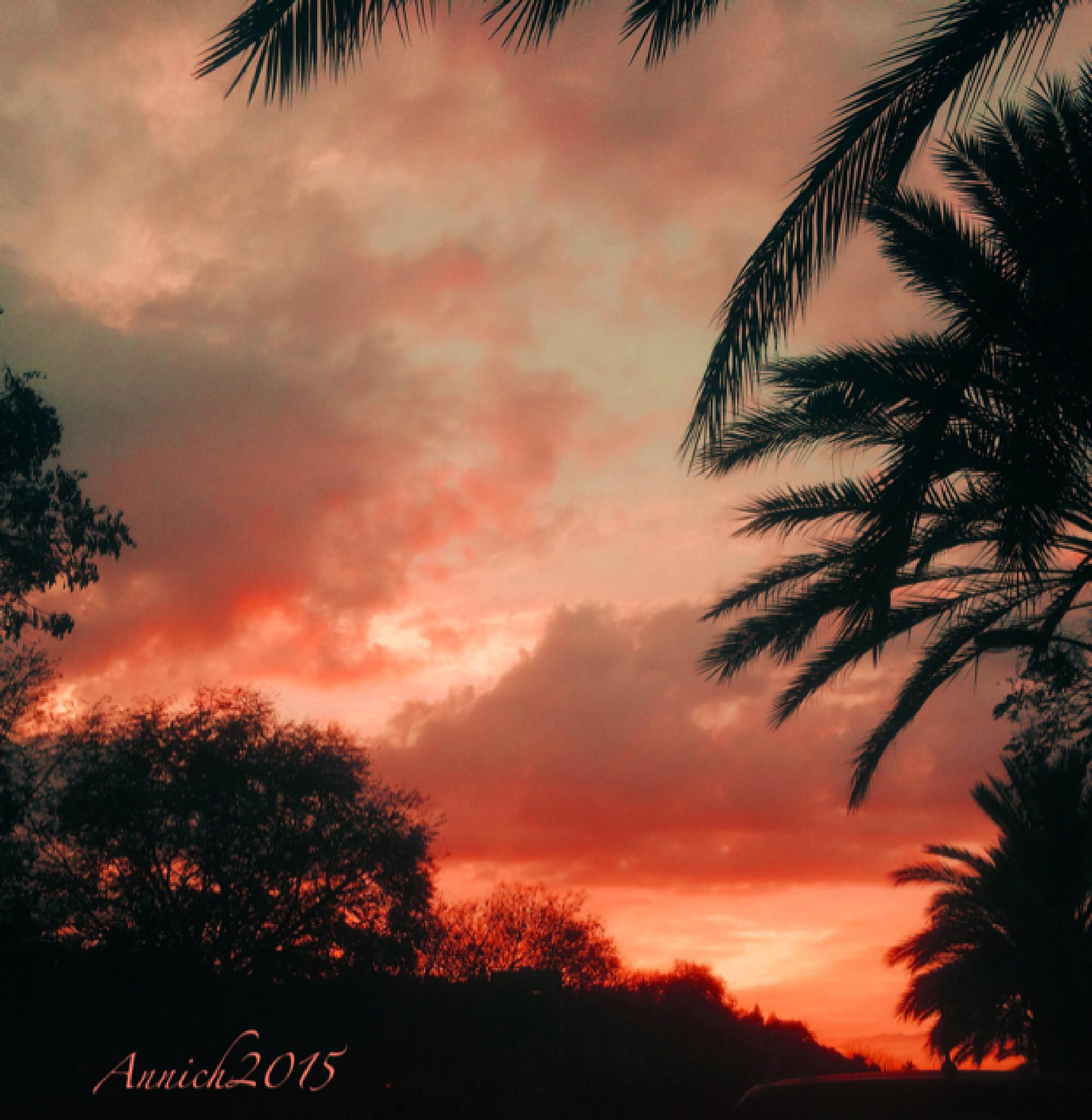 IMG_6795 by Annich