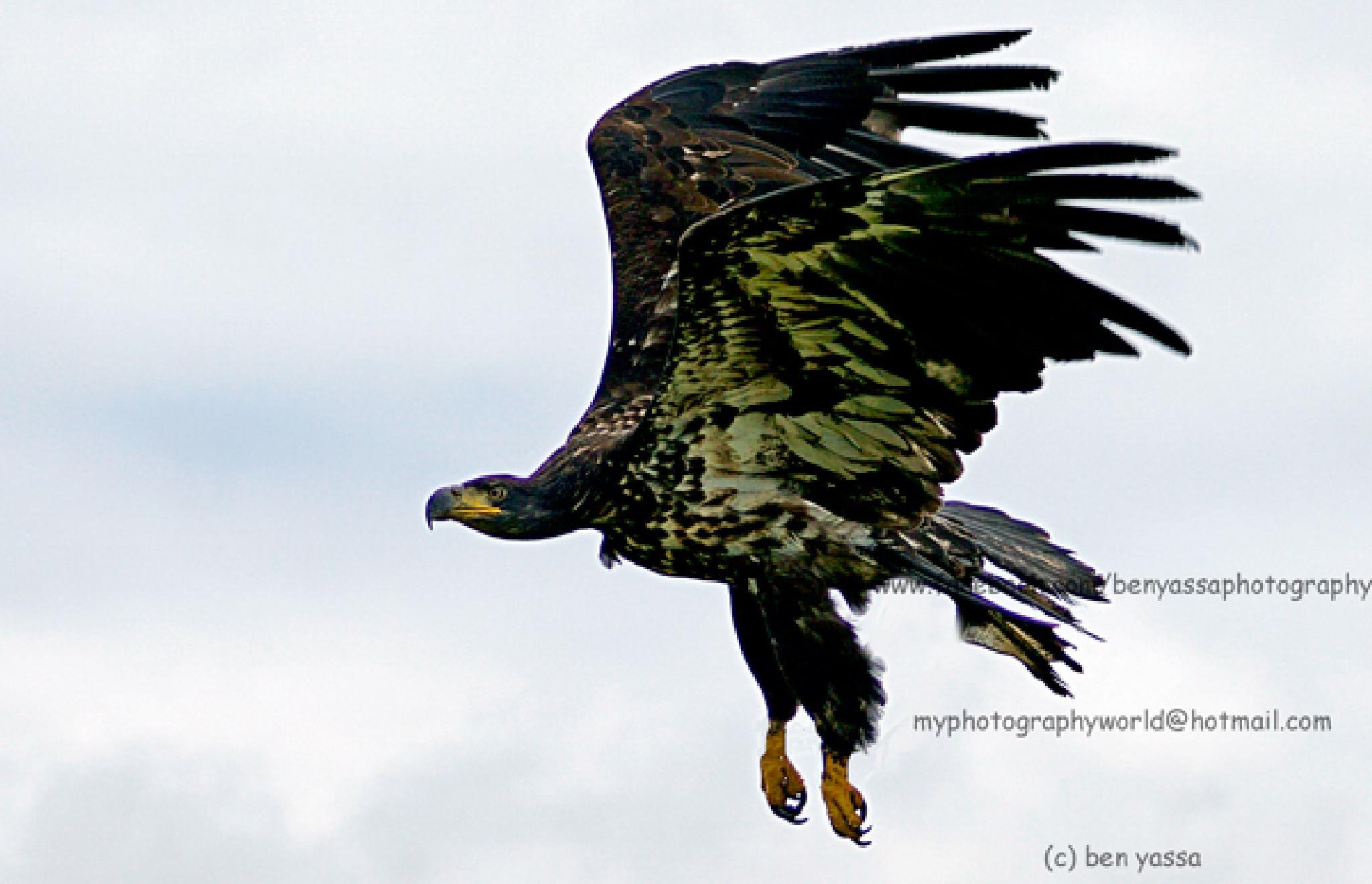 birds 54 by ben yassa