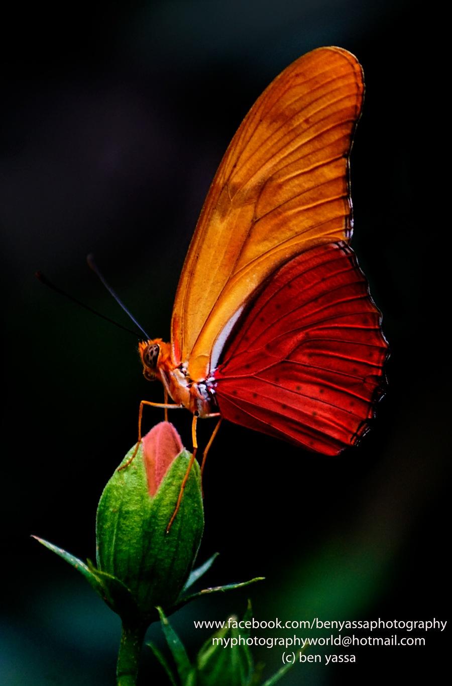 butterfly 13 by ben yassa