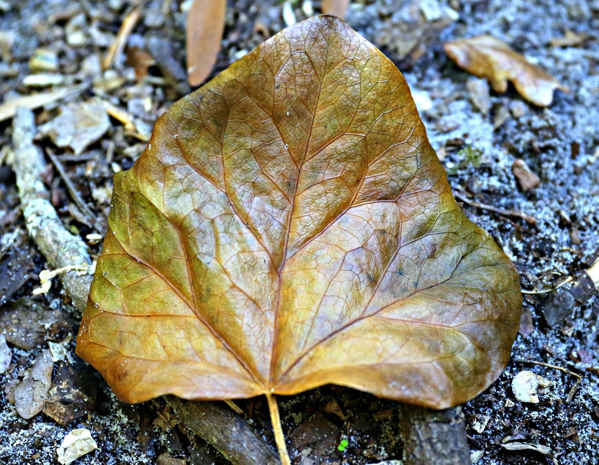 Leaf by GilReis