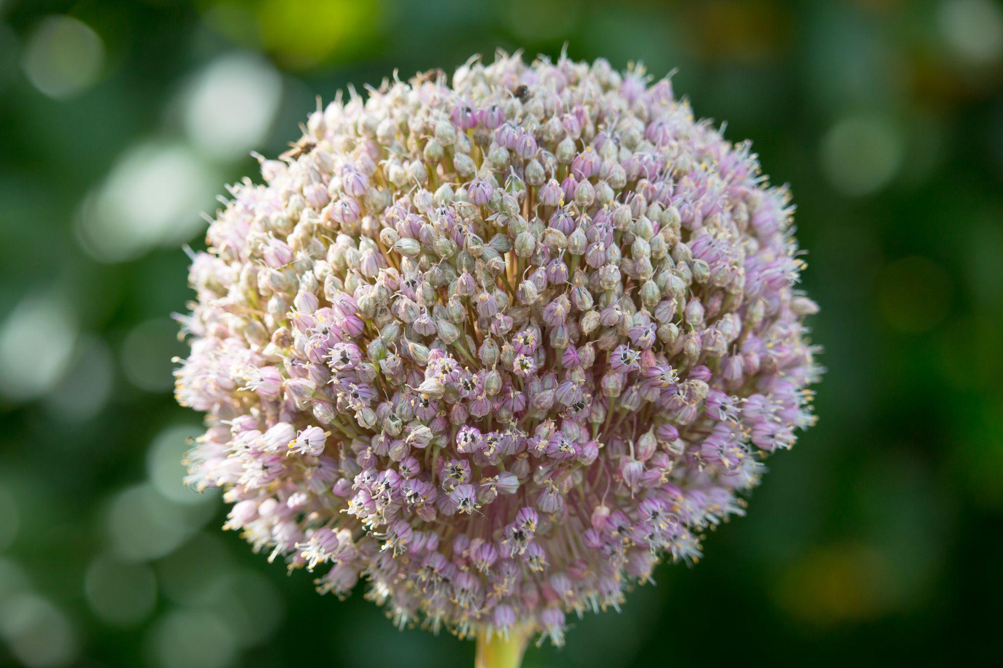 No Idea Flower by Gareth Sawbridge