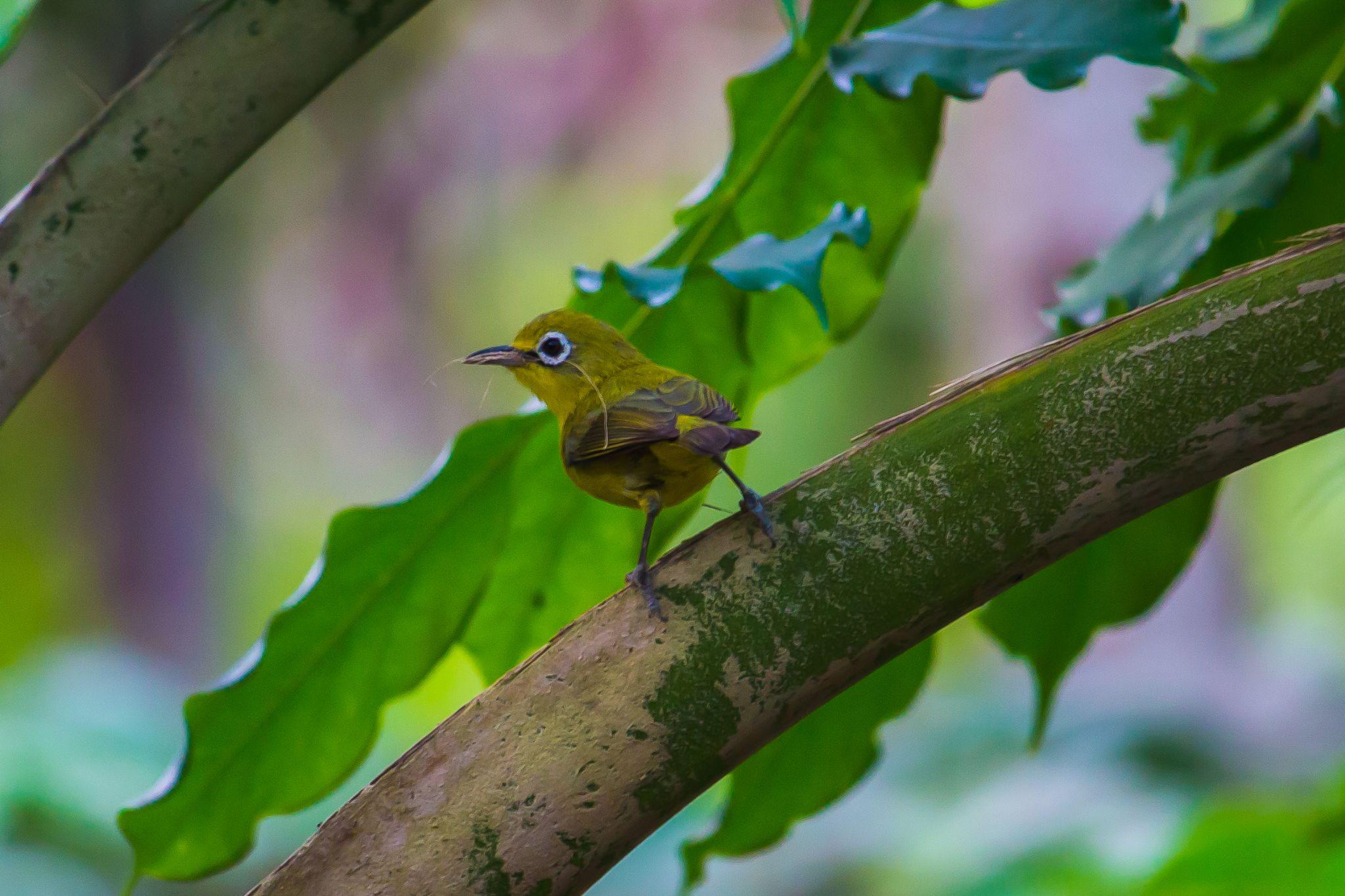 Ready to Nest by Gareth Sawbridge