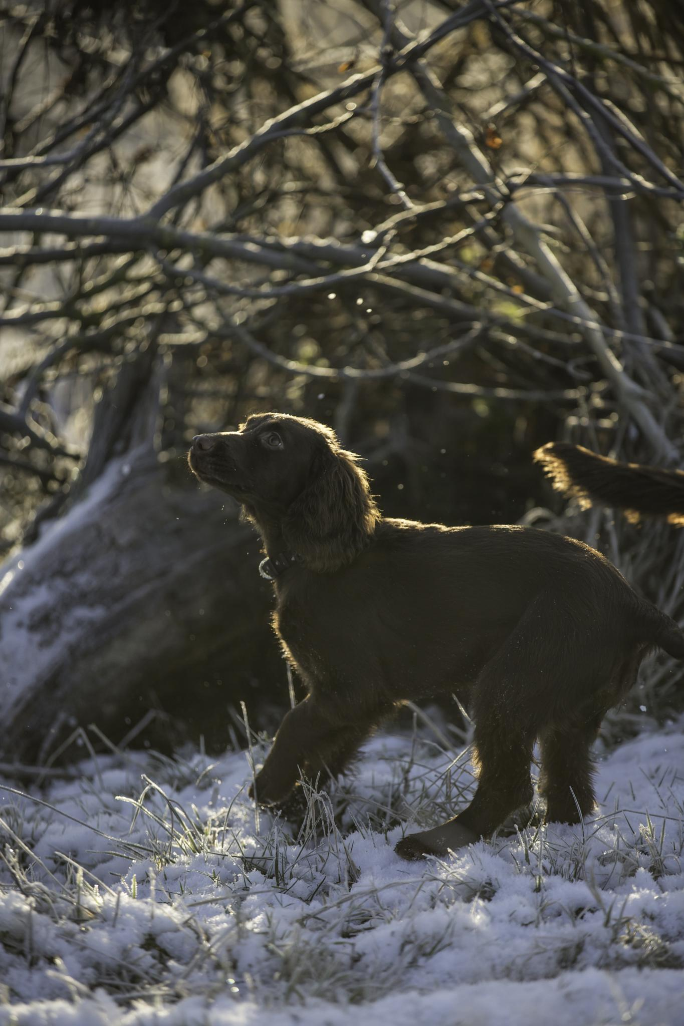 What Is Snow? by Gareth Sawbridge