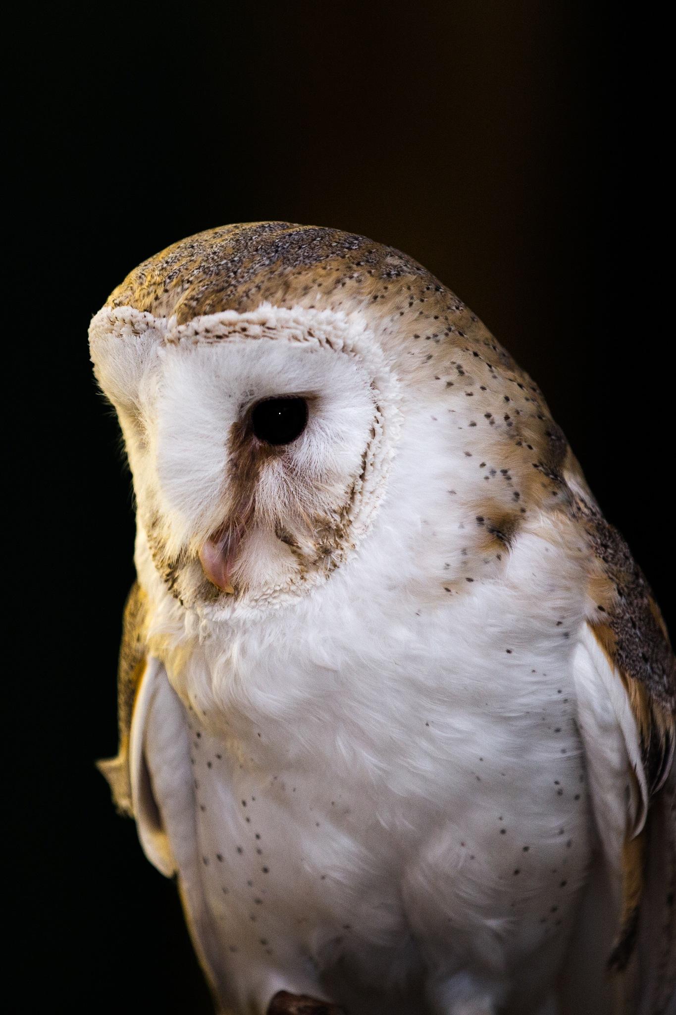 Moody Owl by Gareth Sawbridge
