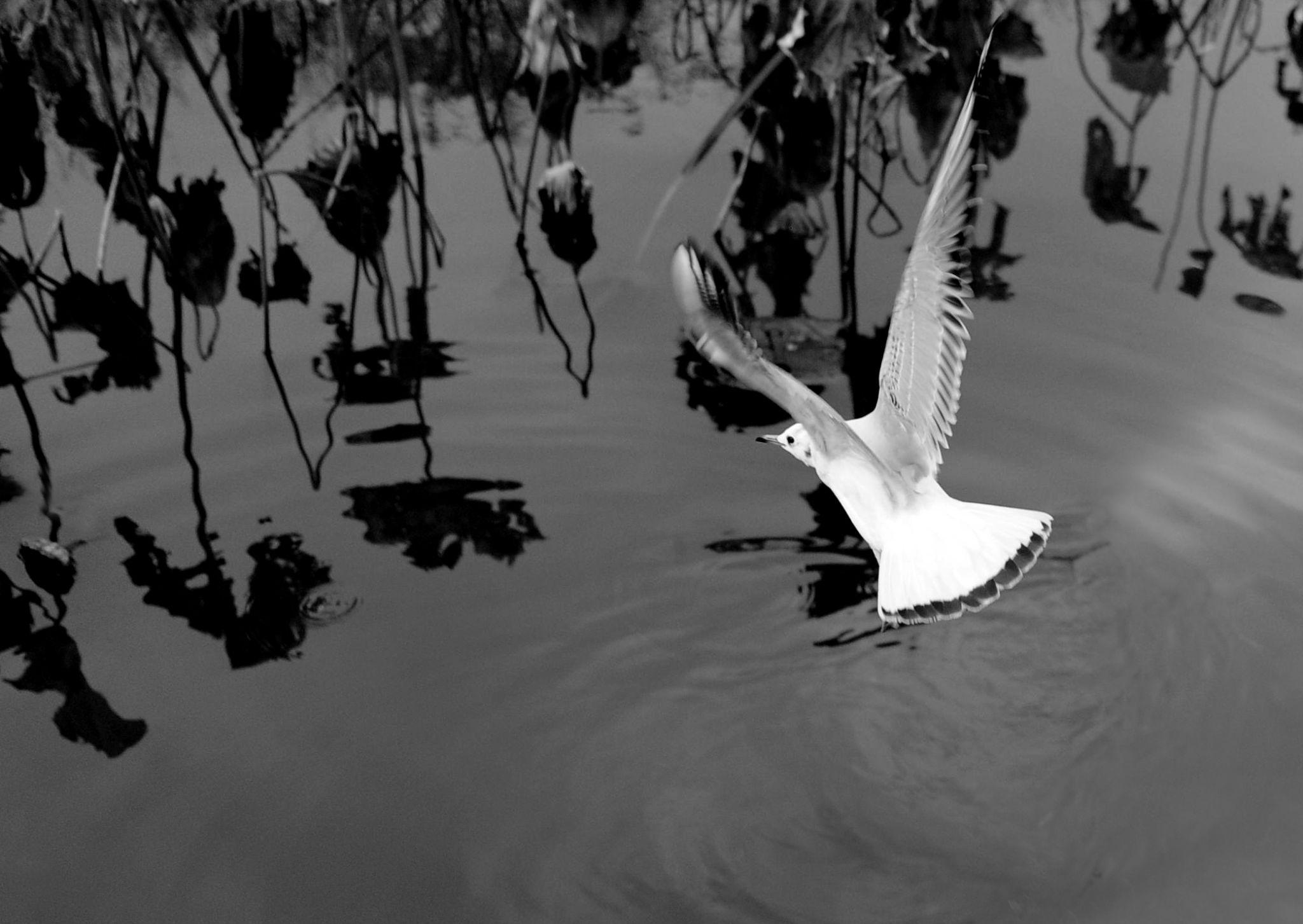 I am Landing......... by leka huie